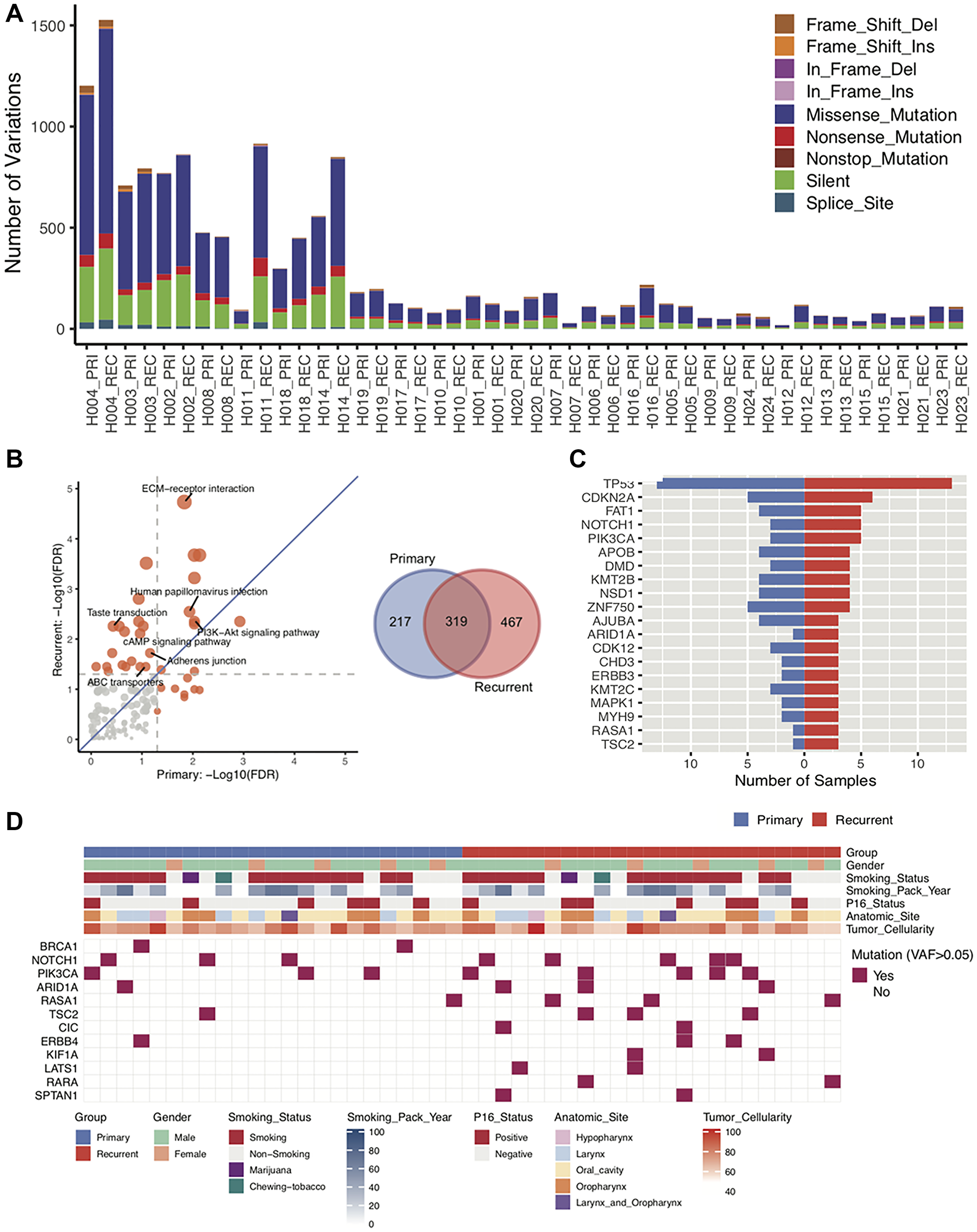 Characterization of DNA sequences of primary and recurrent/metastatic tumors.