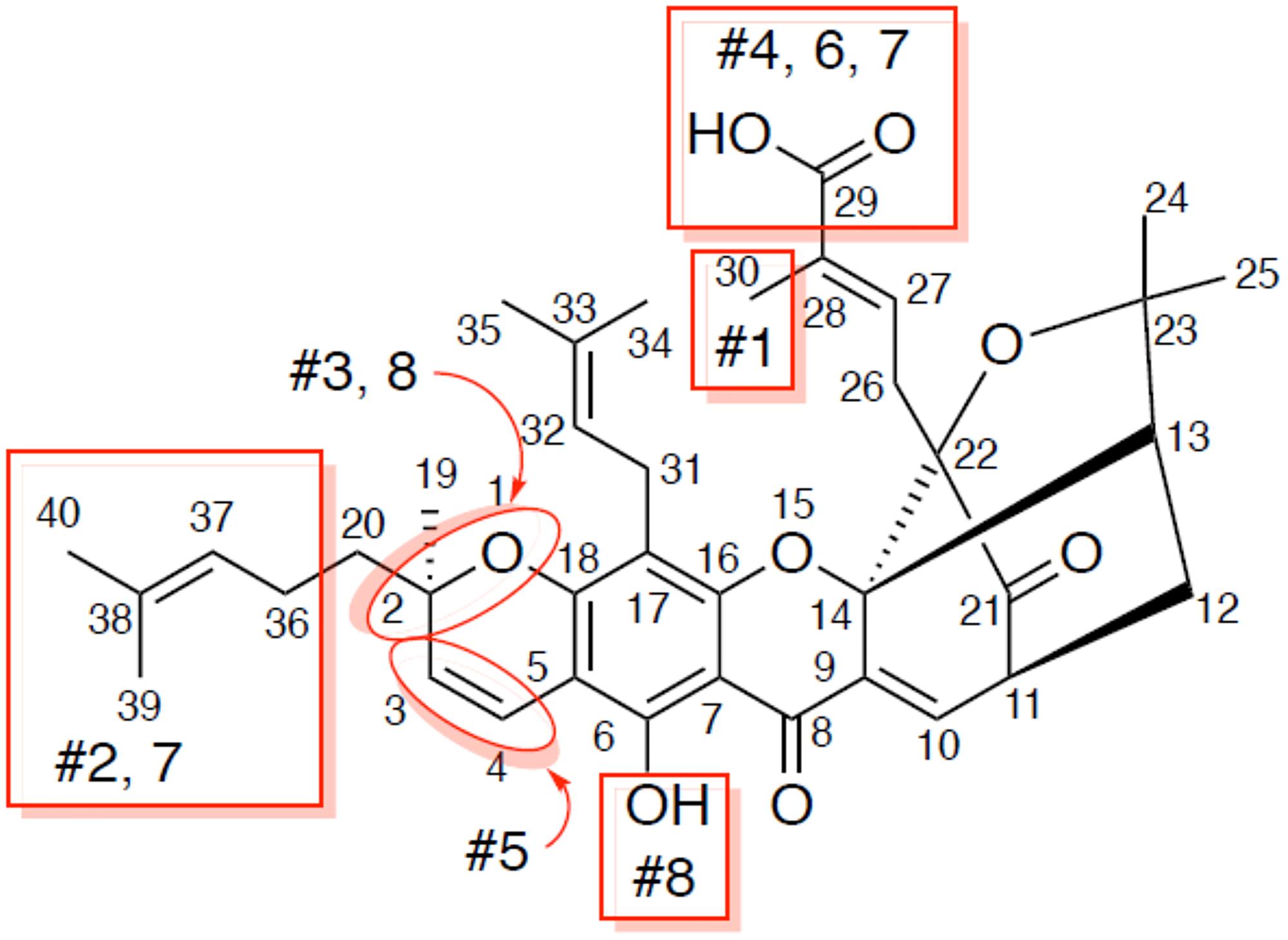 Analogs of gambogic acid (structure-activity relationship study).