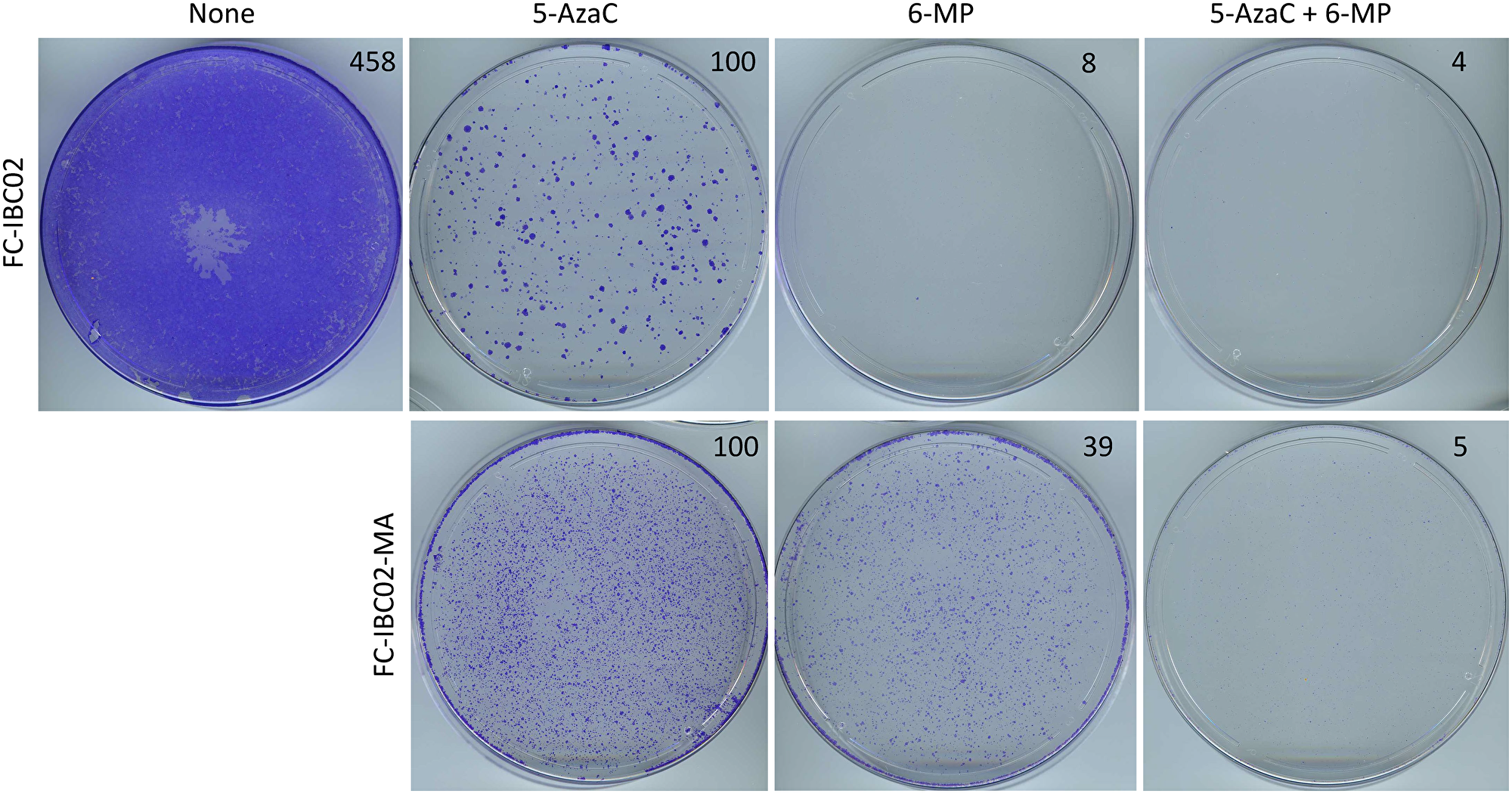 Inhibition of FC-IBC02 and FC-IBC02-MA cells with low-dose 6-MP and 5-AzaC.