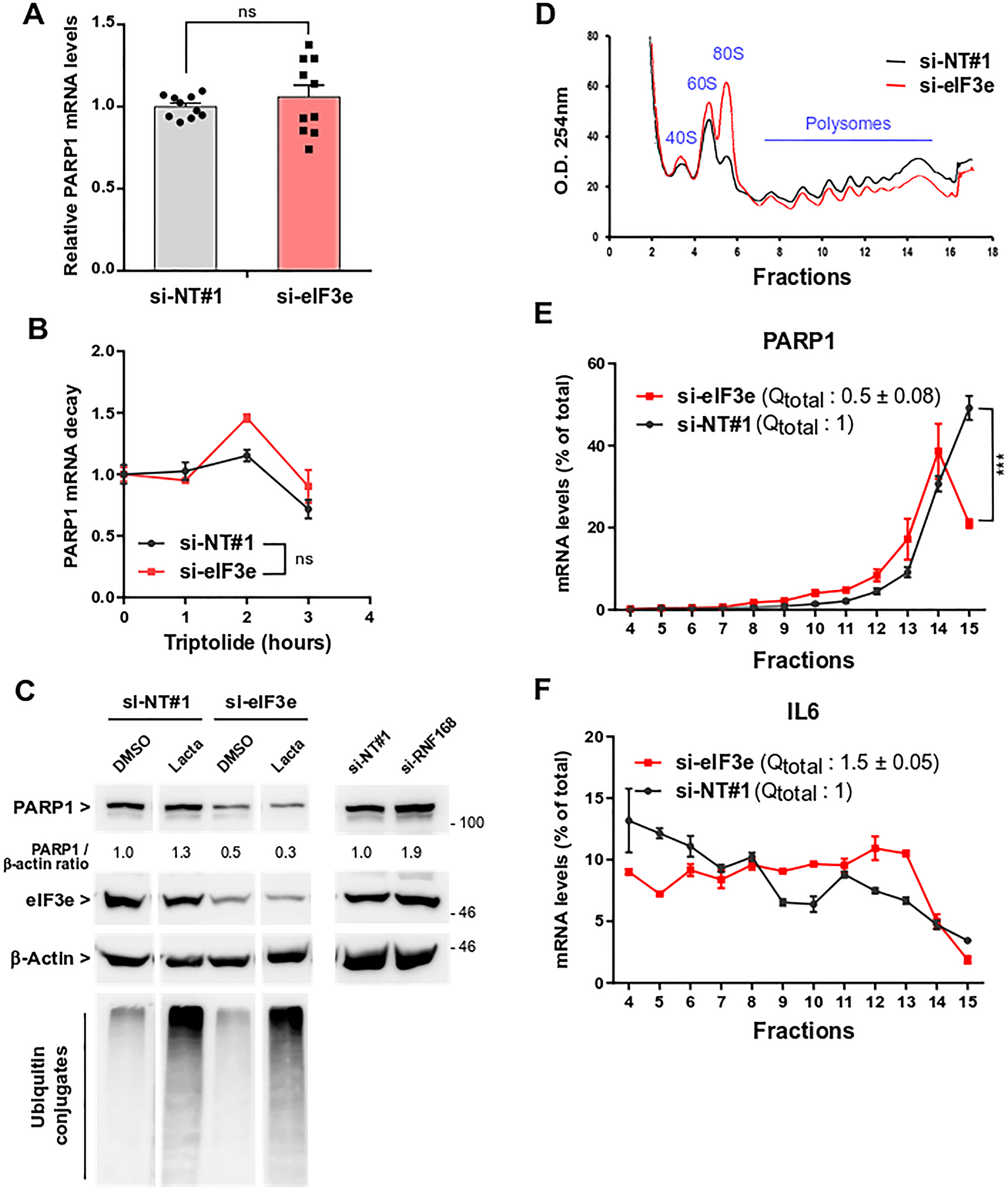eIF3e is required for efficient PARP1 mRNA translation.