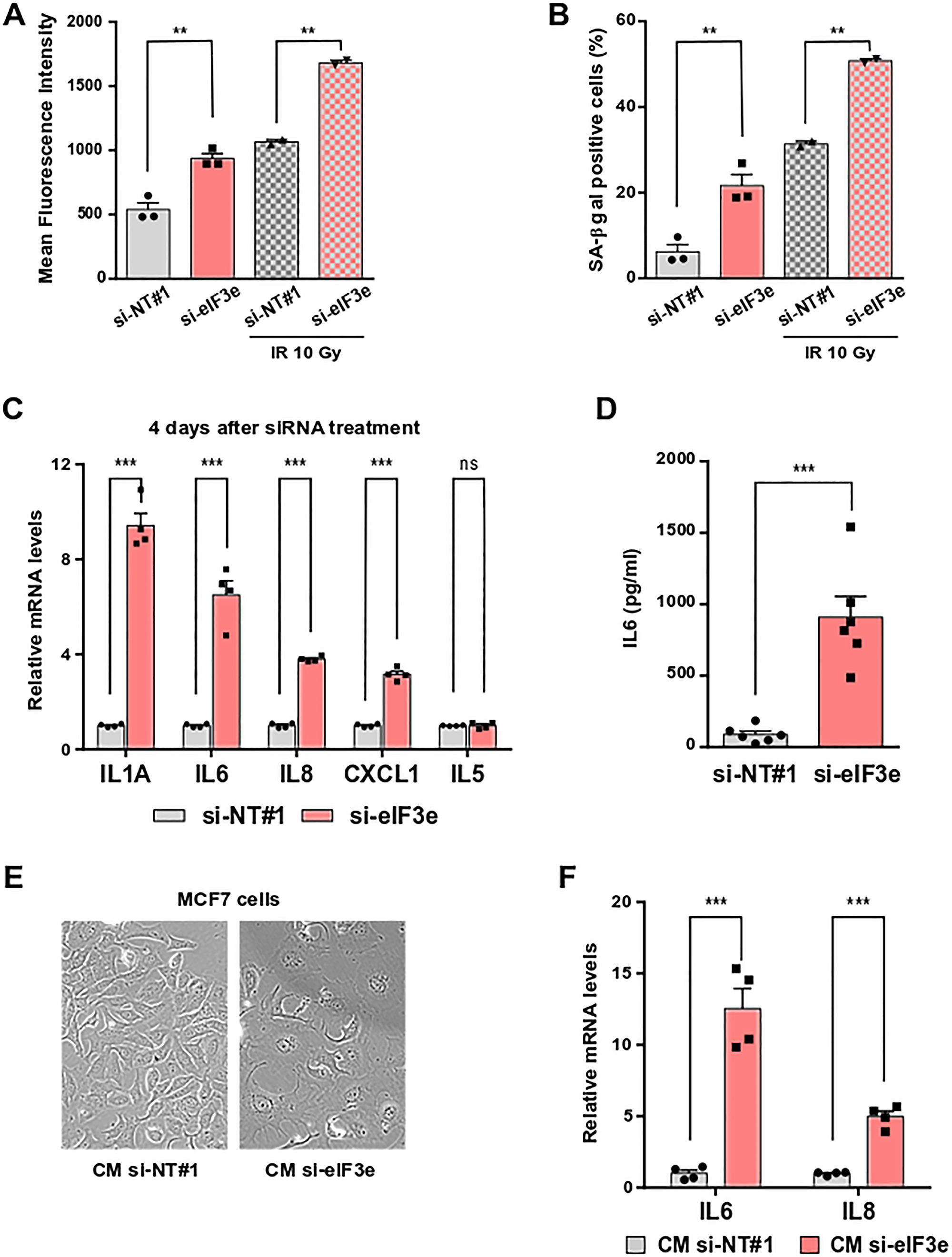eIF3e depletion promotes senescence and senescence-associated secretory phenotype.