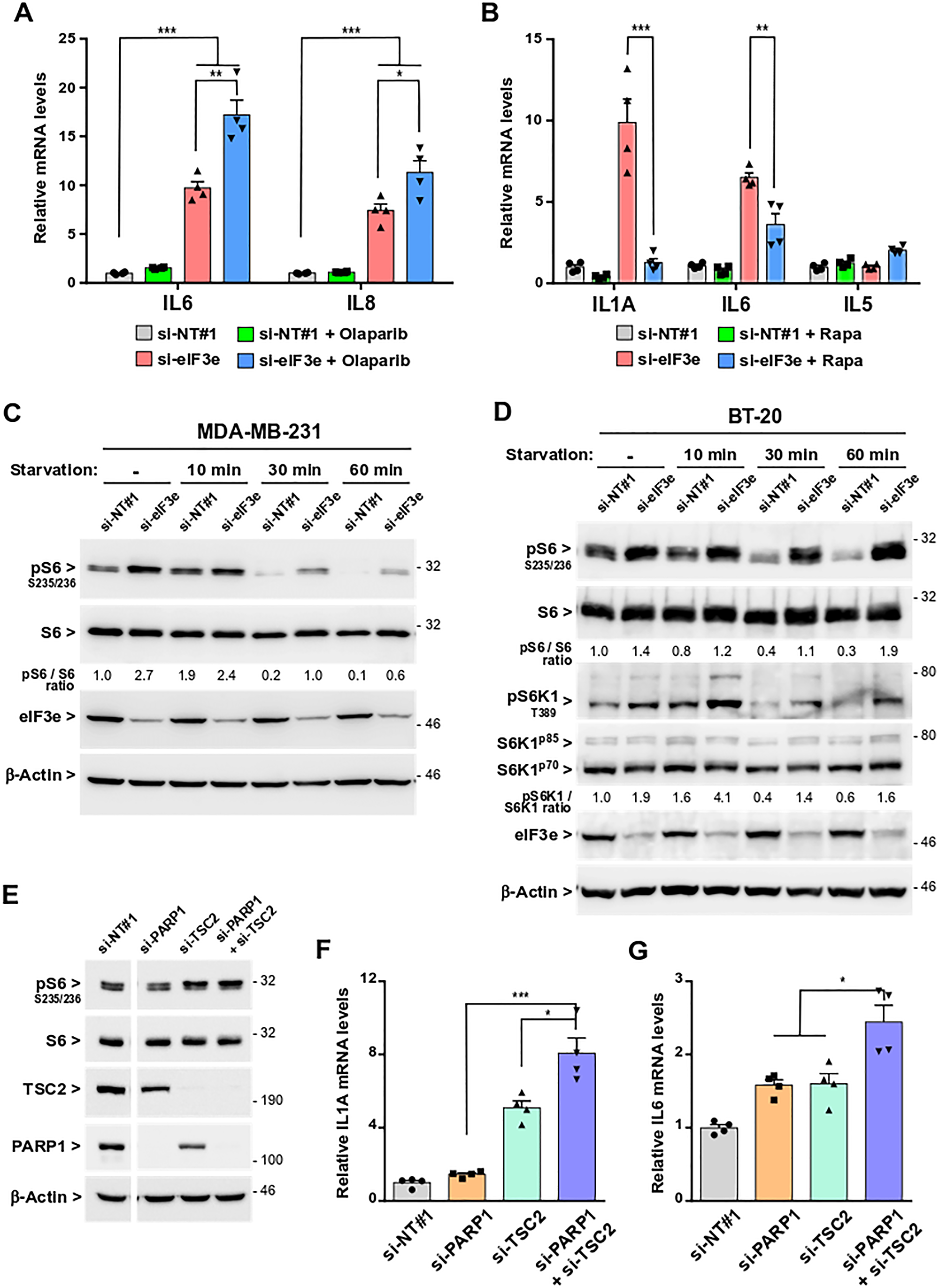 SASP development following eIF3e depletion occurs through PARP1 inhibition and mTORC1 activation.