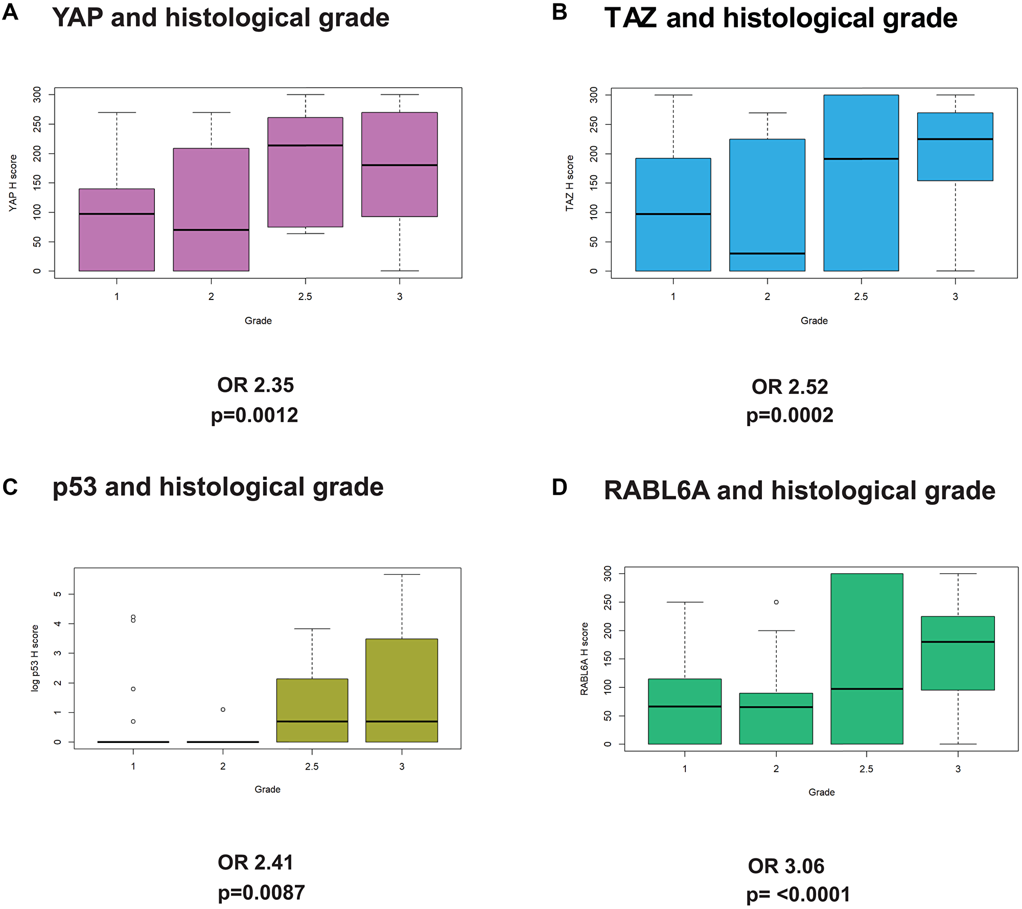 YAP, TAZ, p53, and RABL6A expression are associated with higher histological grade.