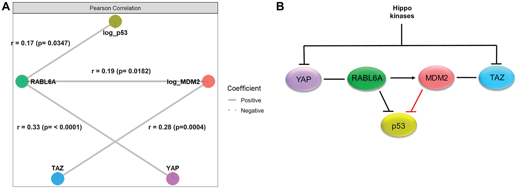 Network analysis supported a model integrating the Hippo pathway, p53/MDM2 axis and RABL6A signaling in sarcomas.
