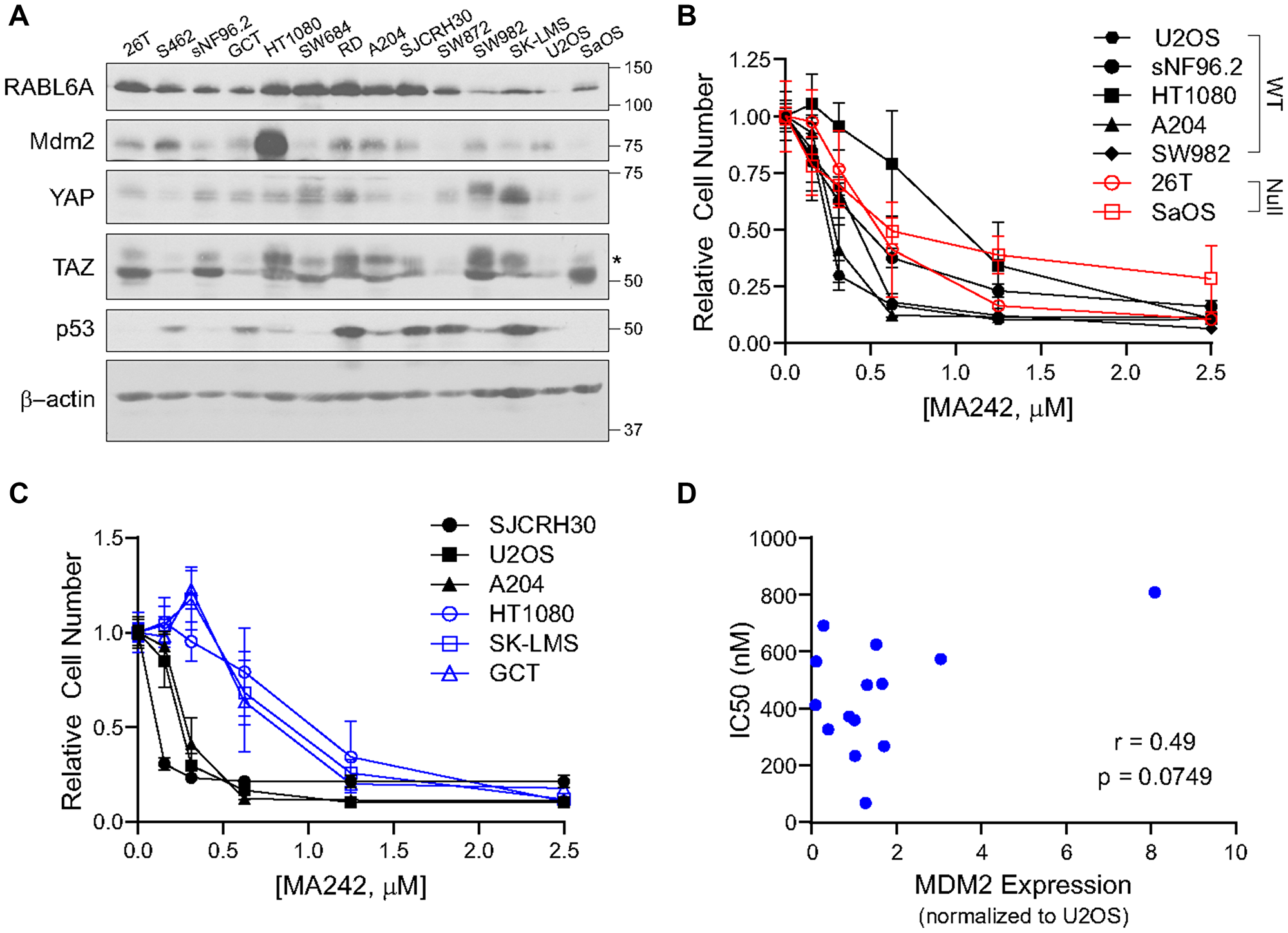 MDM2 can be targeted sarcoma cell lines independent of p53 status.