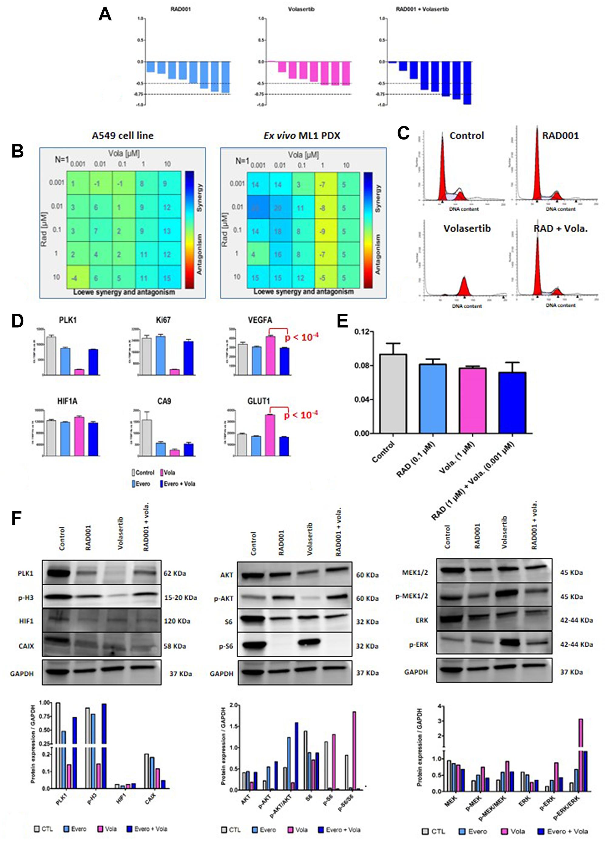 In vitro study of RAD001 (everolimus) + volasertib combination.