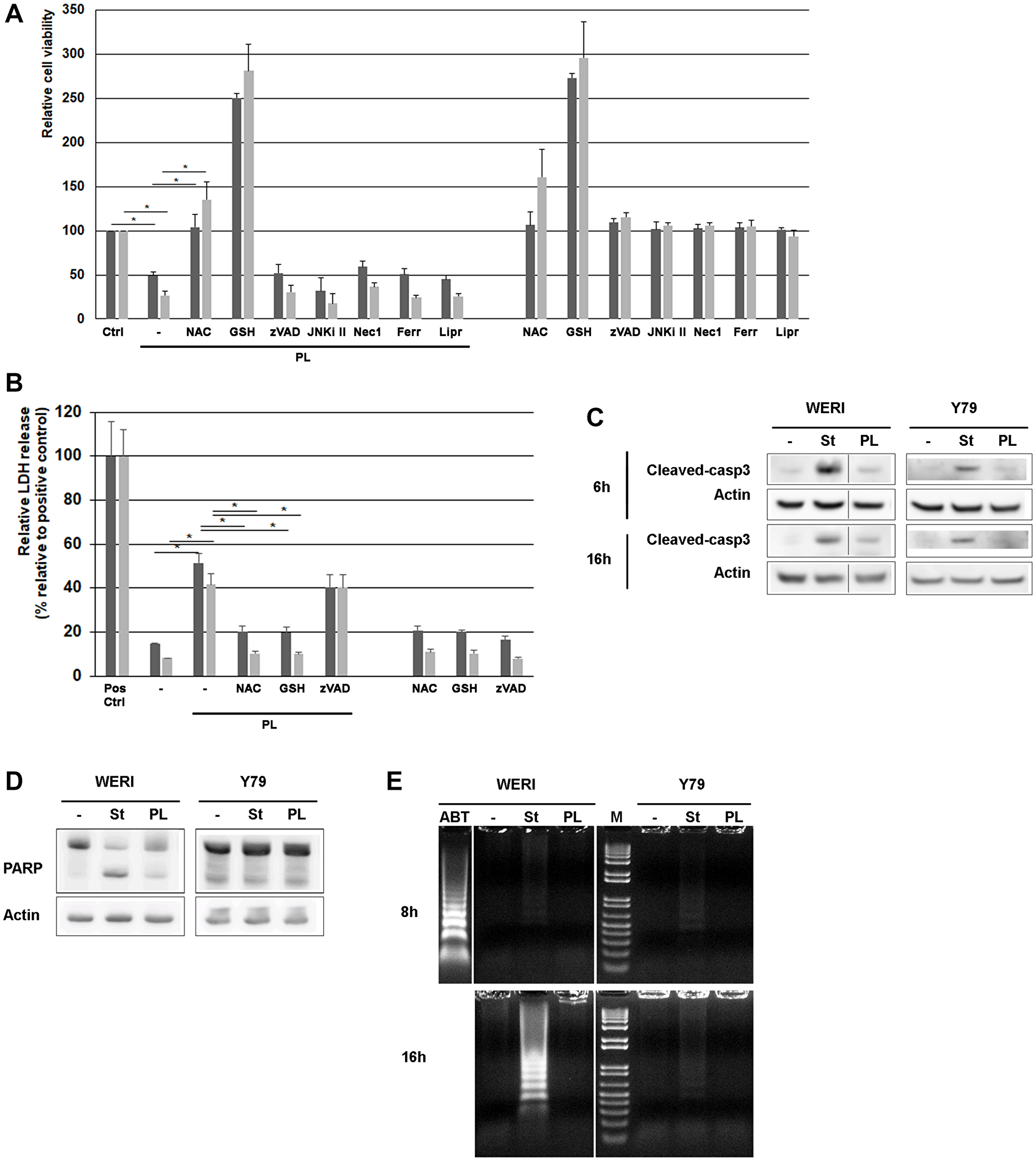 PL induces cell death in WERI-Rb and Y79 retinoblastoma cells.