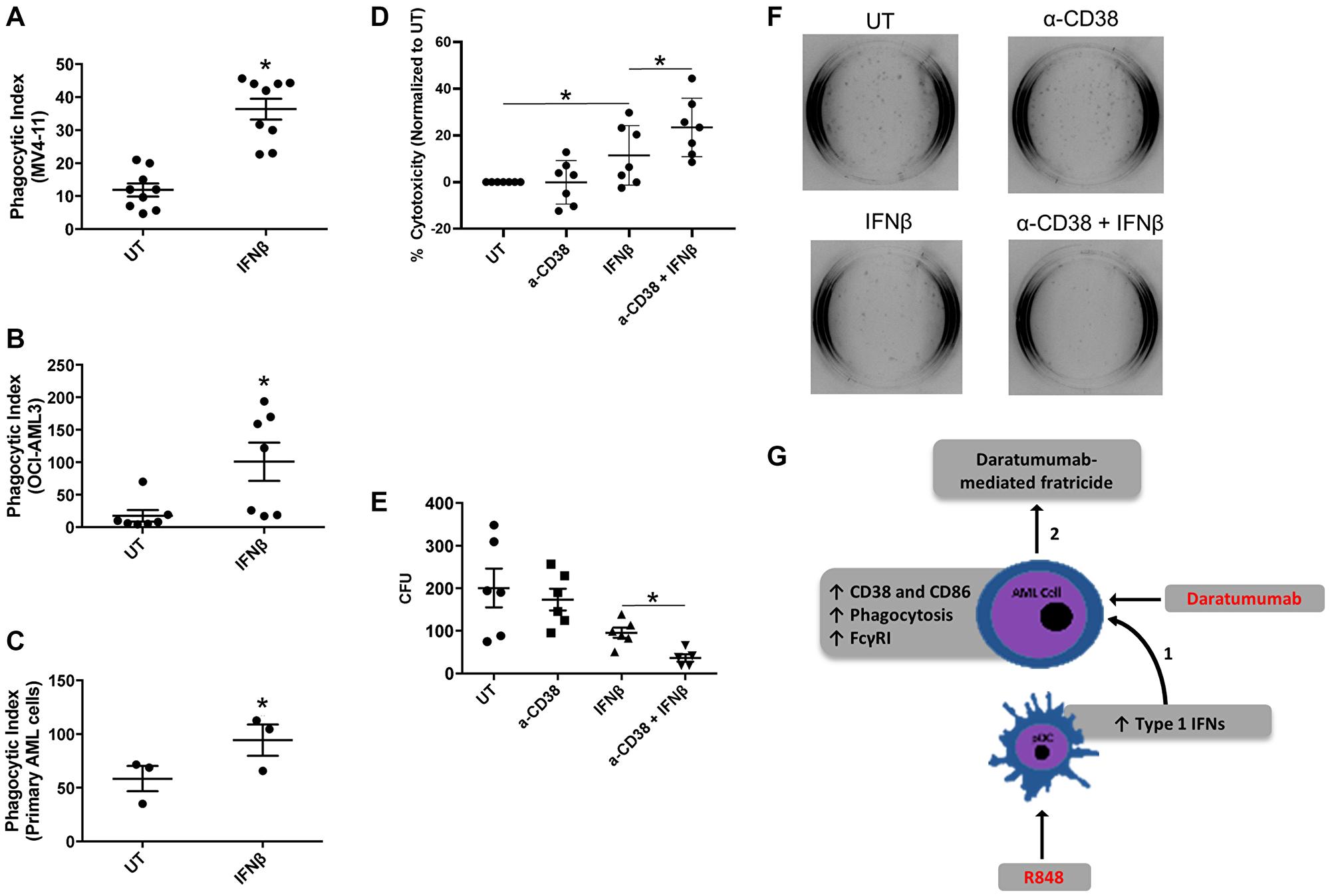 IFNβ-induced AML-cell cytotoxicity is enhanced with anti-CD38 antibody daratumumab.
