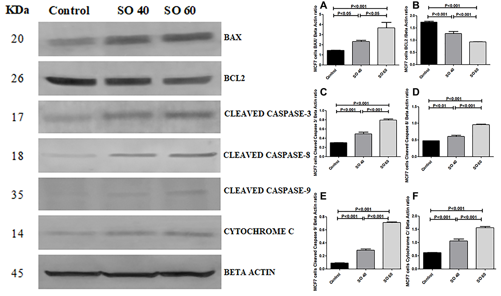 Expression of apoptotic proteins Bax, cleaved caspase-3, cleaved caspase-8, cleaved caspase-9, cytochrome c and anti-apoptotic proteins Bcl2 in 40 mmol and 60 mmol SO treated MCF-7 cancer cells compared to control non-treated MCF-7 cells.