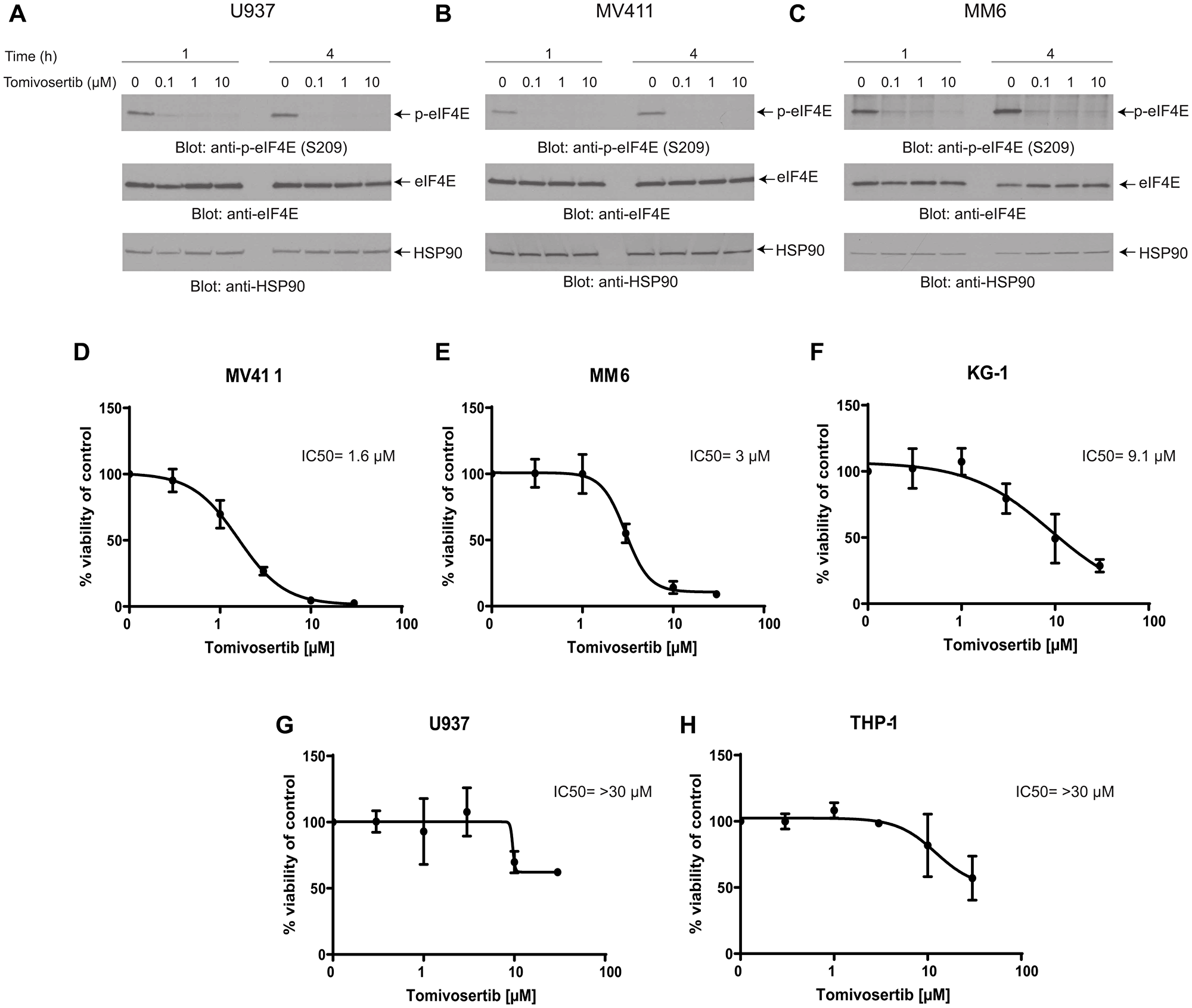 Tomivosertib blocks phosphorylation of eIF4E at Ser209 and inhibits cell viability in AML cells.