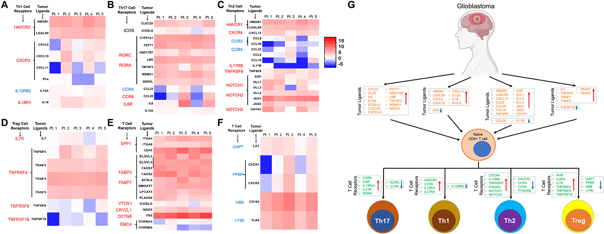 Expression pattern of ligands of corresponding receptors specific for CD4+ T cell lineages in GBM tumor tissue.