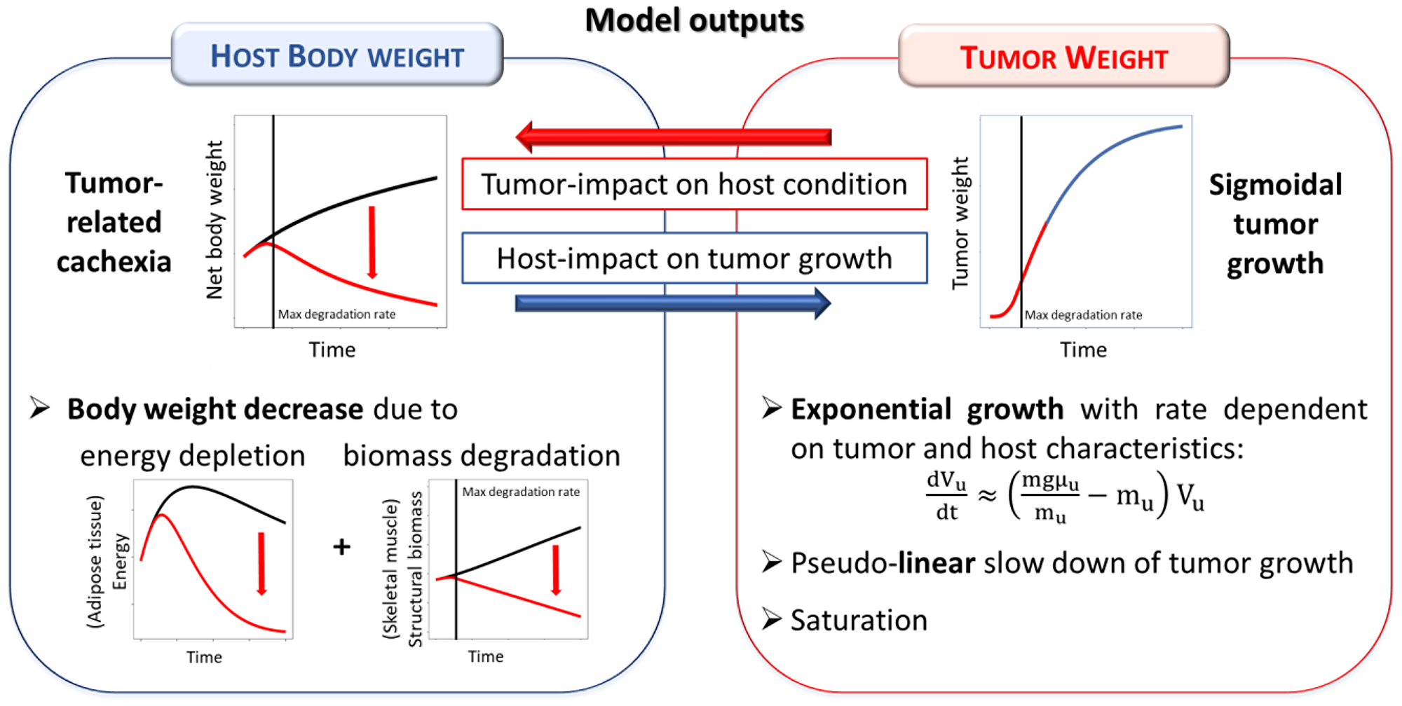 Summary of the tumor-in-host interactions as modeled in the tumor-in-host DEB-based framework.