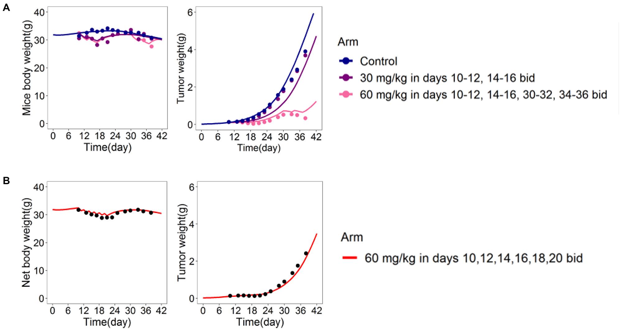 DEB-based tumor-in-host model predictive power assessed in xenograft mice [16].