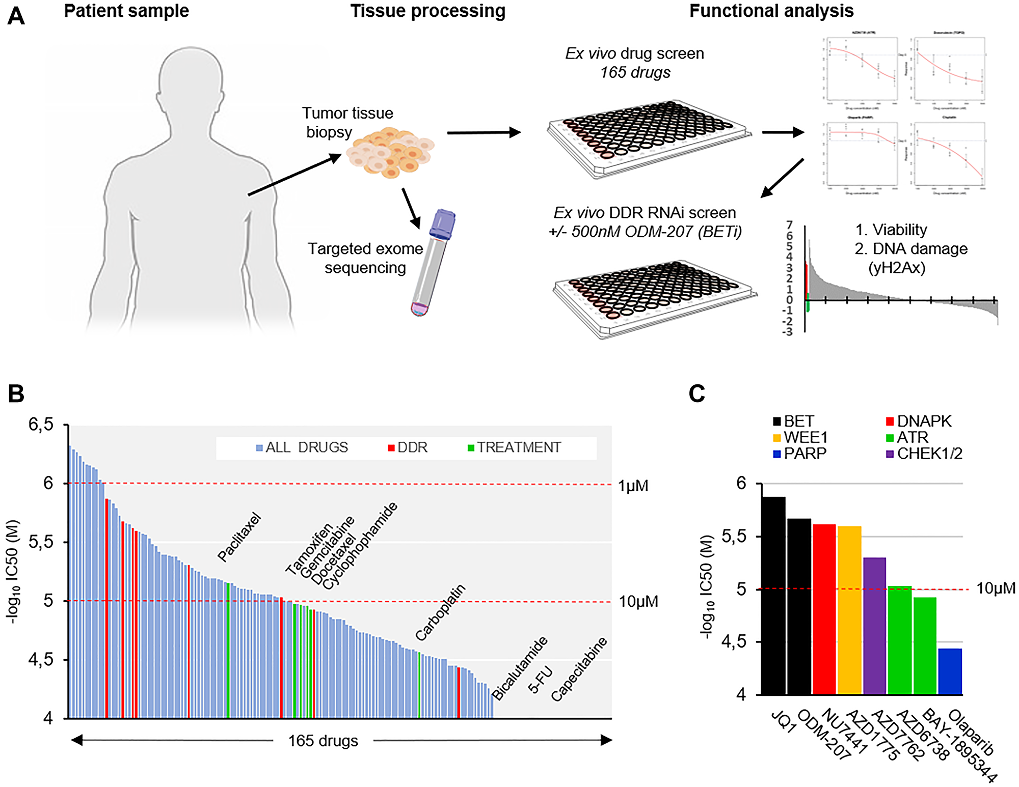Ex vivo analysis of therapeutic strategies in a metastatic apocrine sweat gland cancer.
