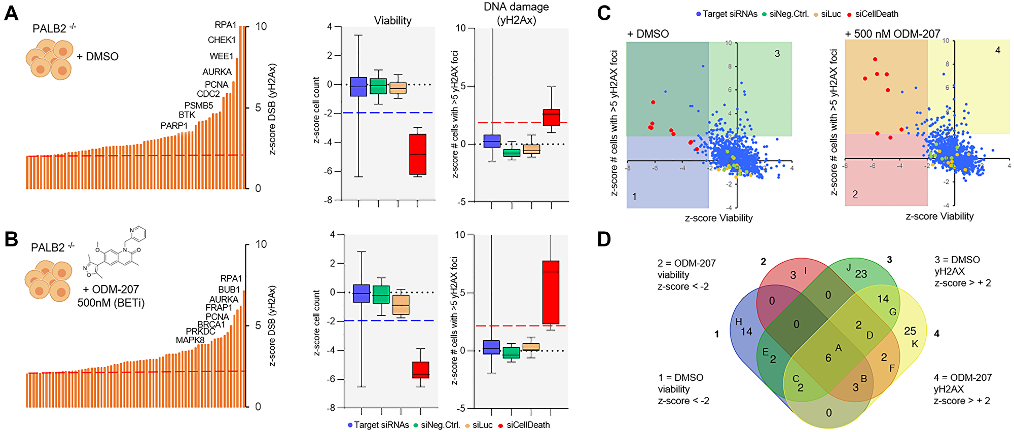 A DNA repair RNAi screen for the identification of essential DDR genes in the CAC cells.