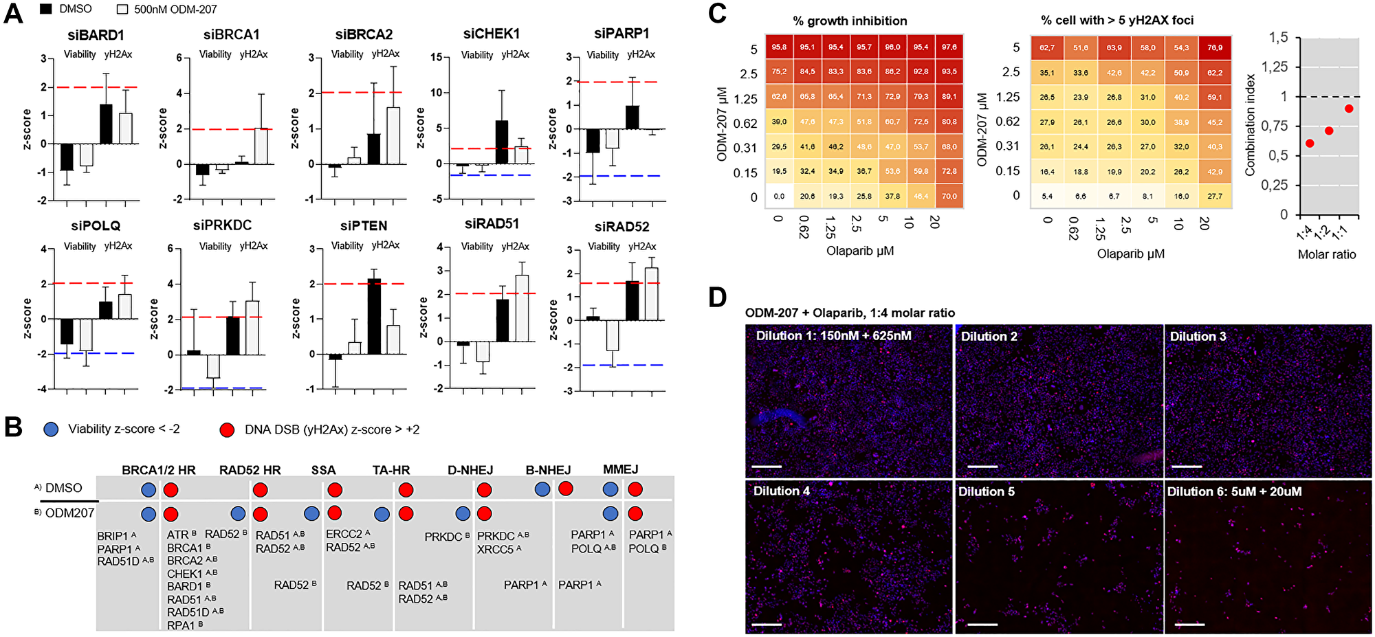 Analysis of efficacy of targeting different DNA repair pathways on PALB2 mutated CAC cells.