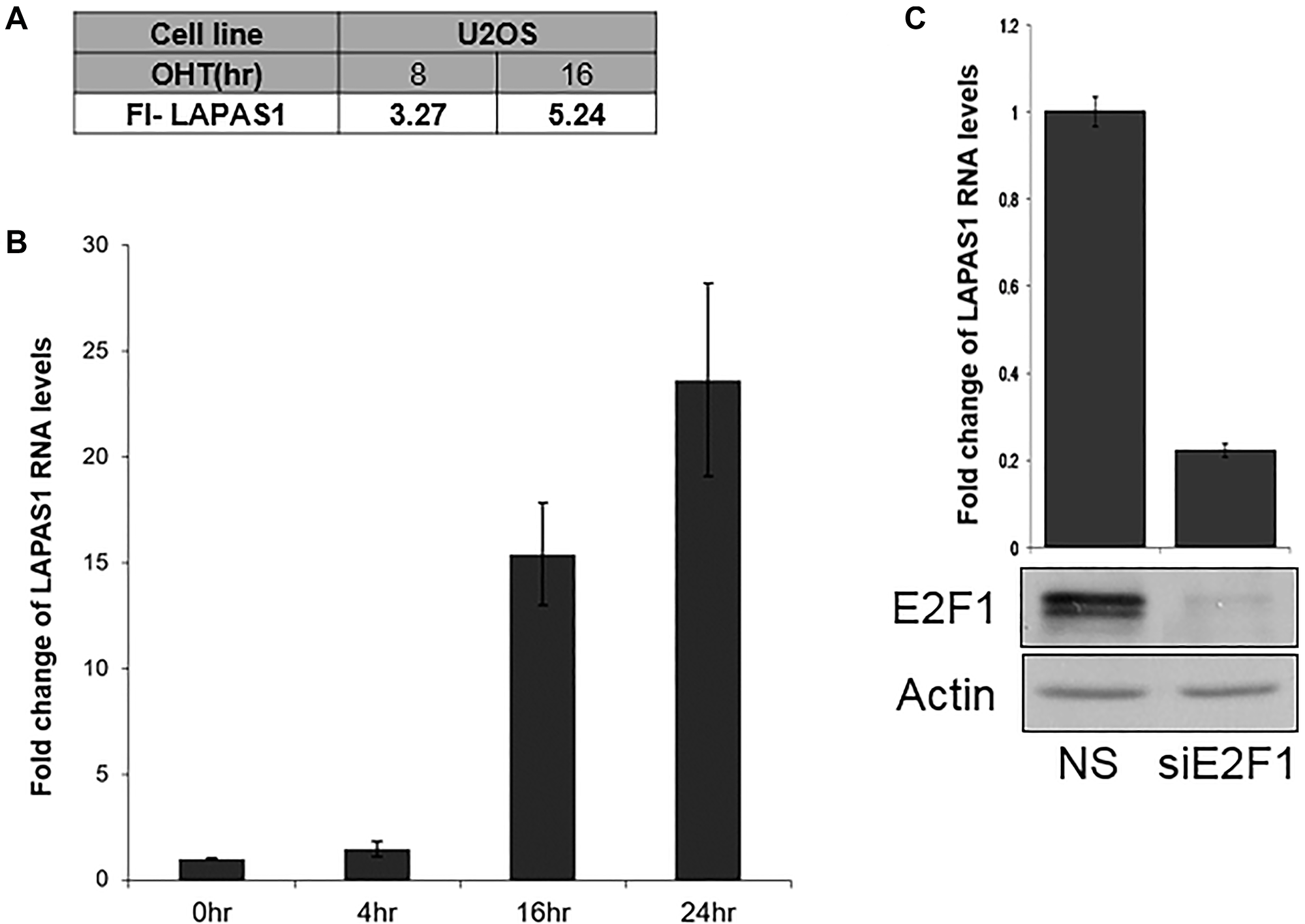 E2F1 regulates LAPAS1 RNA levels.