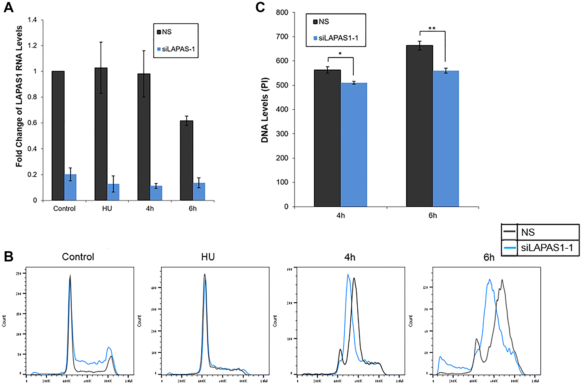 Silencing of LAPAS1 in G1-synchronized U2OS cells results in slower progression through S phase.