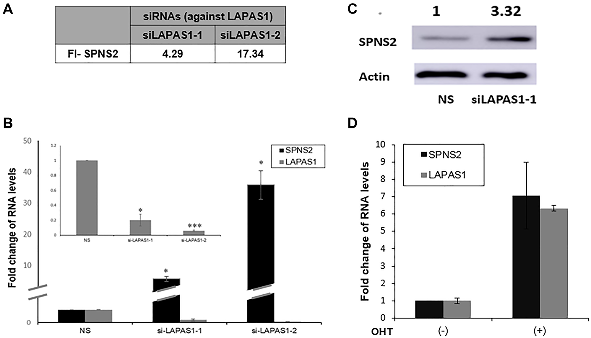 SPNS2 levels increase following LAPAS1 silencing or E2F1 activation.