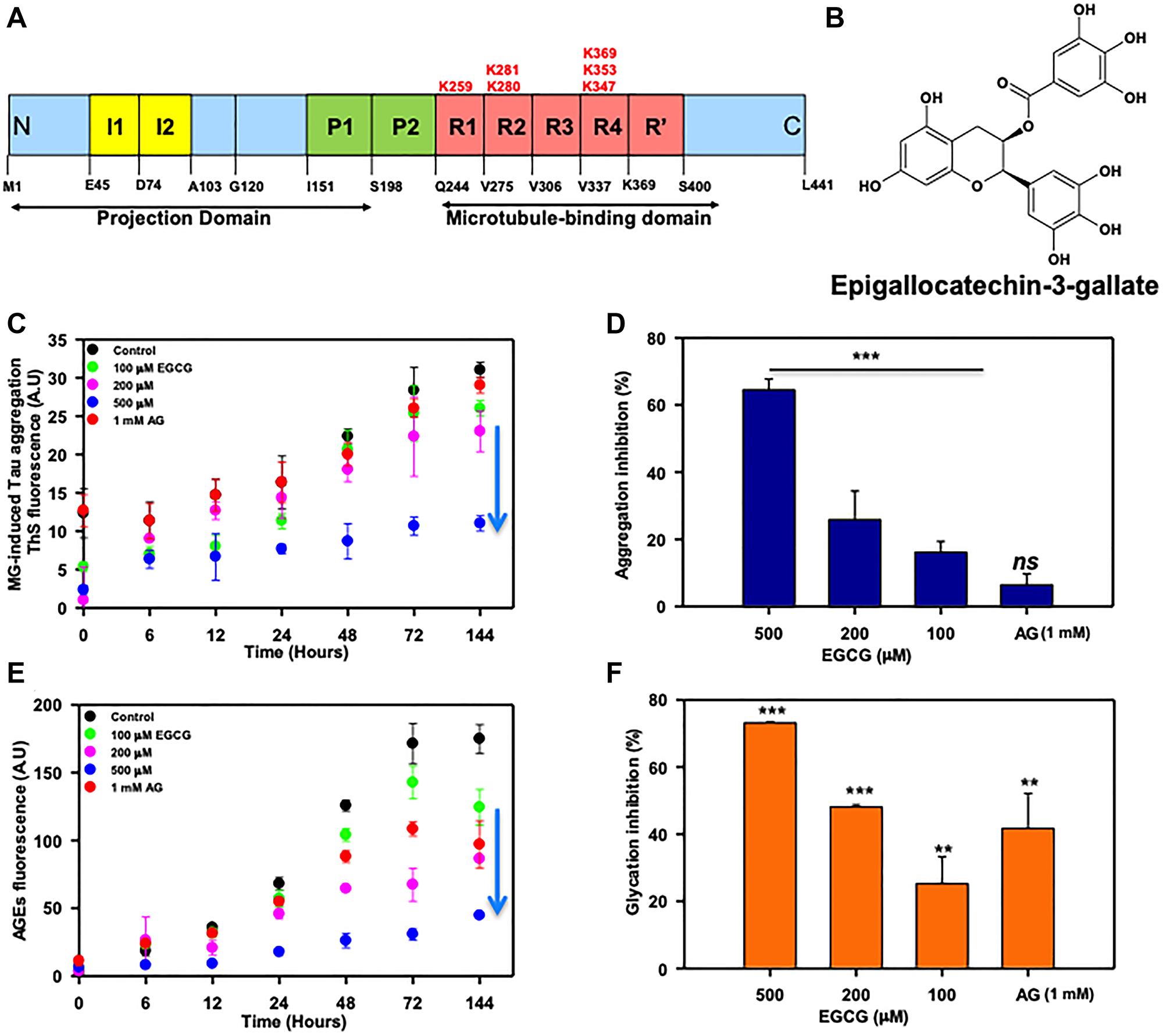 EGCG inhibits Tau glycation.