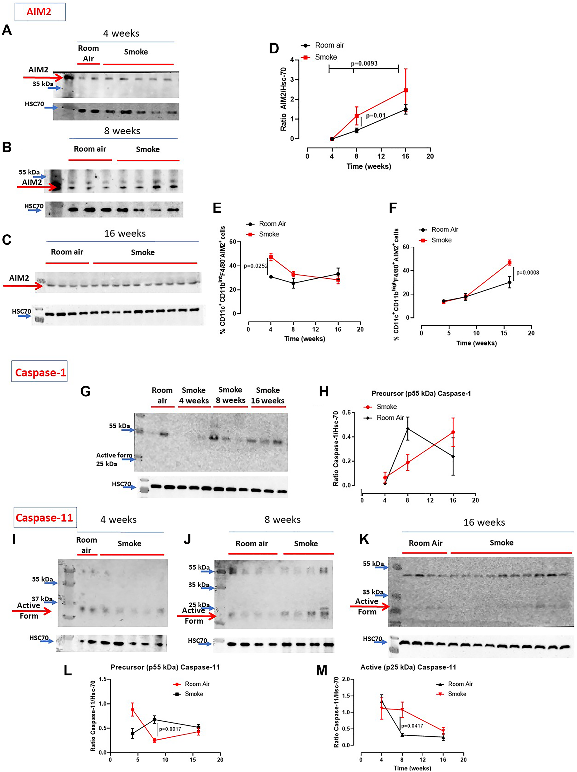 Involvement of the inflammasome in smoking mice.