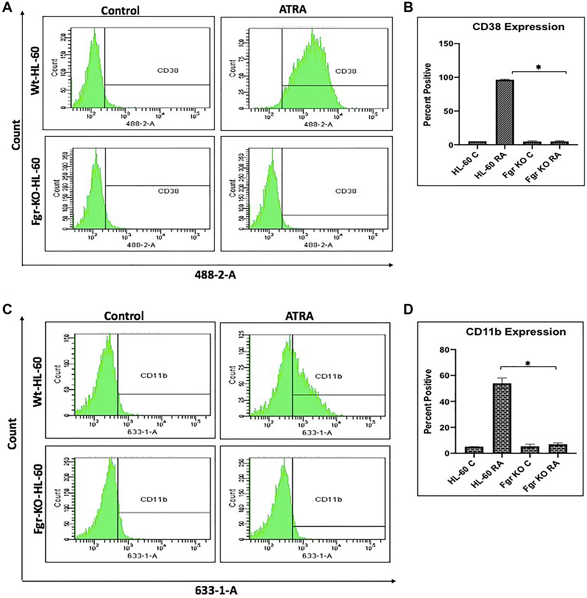 Phenotypic cell surface differentiation marker analysis of HL-60 wt and FGR KO cells untreated and treated with RA.