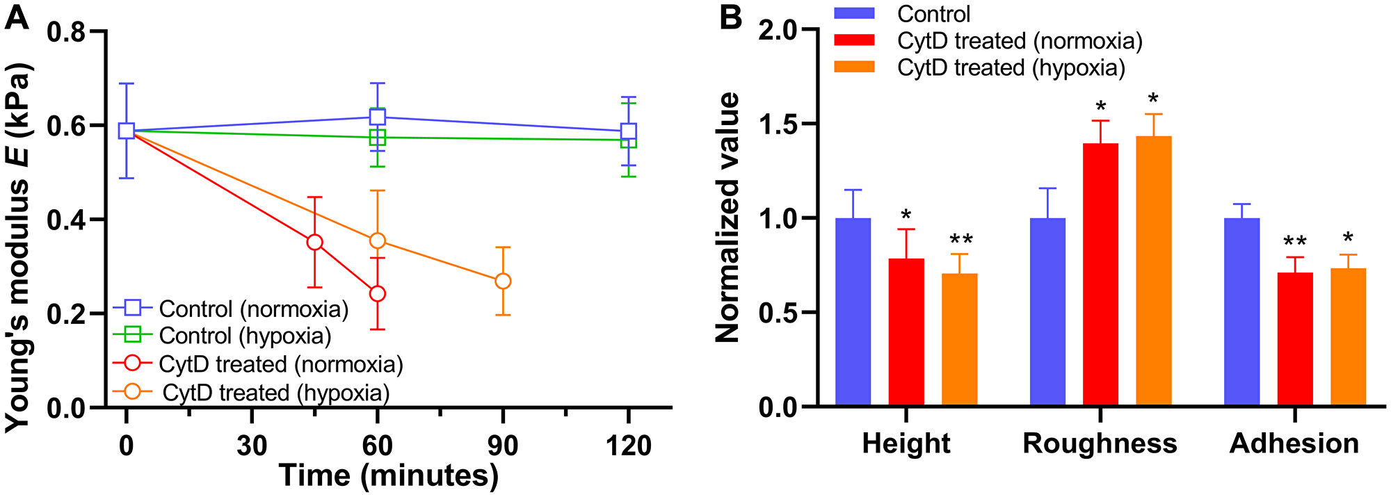 Alteration in biomechanical properties of PANC-1 cells exposed to 5 μM cytochalasin D (CytD) in normoxia and hypoxia.