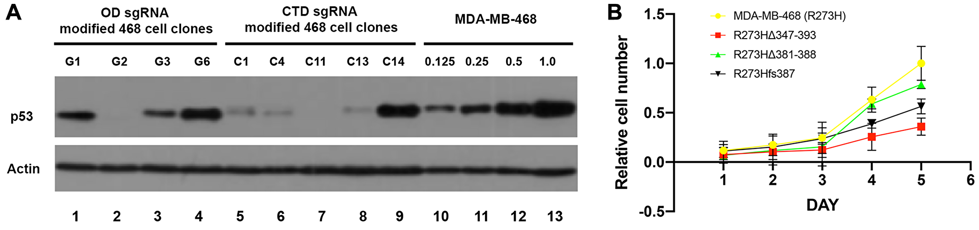 Reduction of mtp53 protein levels and proliferation results from mutations in the OD and CTD of p53.