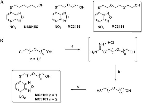 Structures and preparation of the NBDHEX derivatives MC3165 and MC3181.