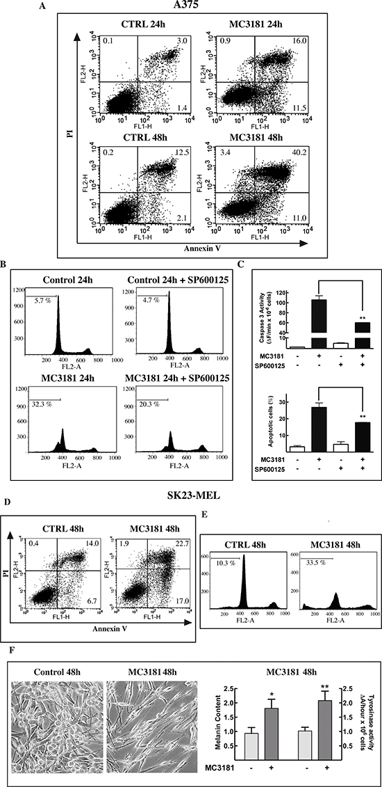 MC3181 triggers JNK-dependent apoptosis in A375 cells and morphological changes in SK23-MEL cells.