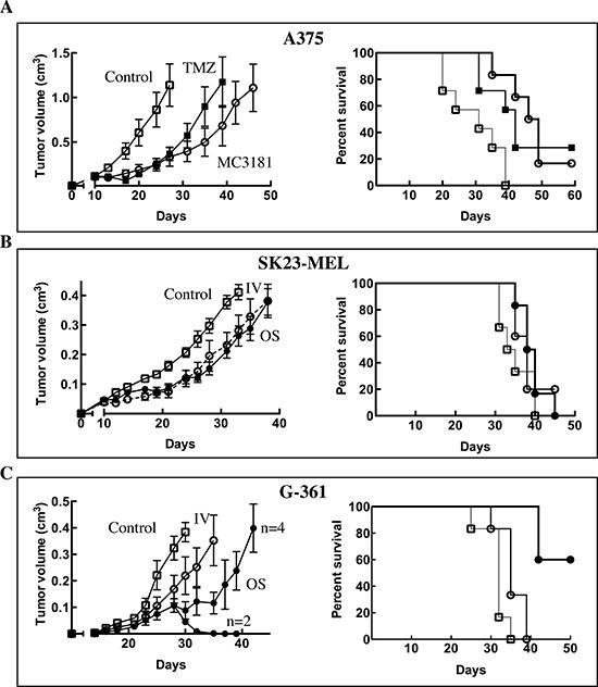 In vivo antitumor efficacy of MC3181.