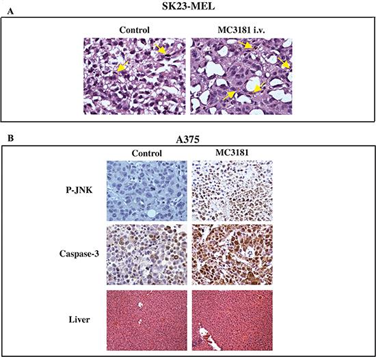 Immunohistochemical analysis.