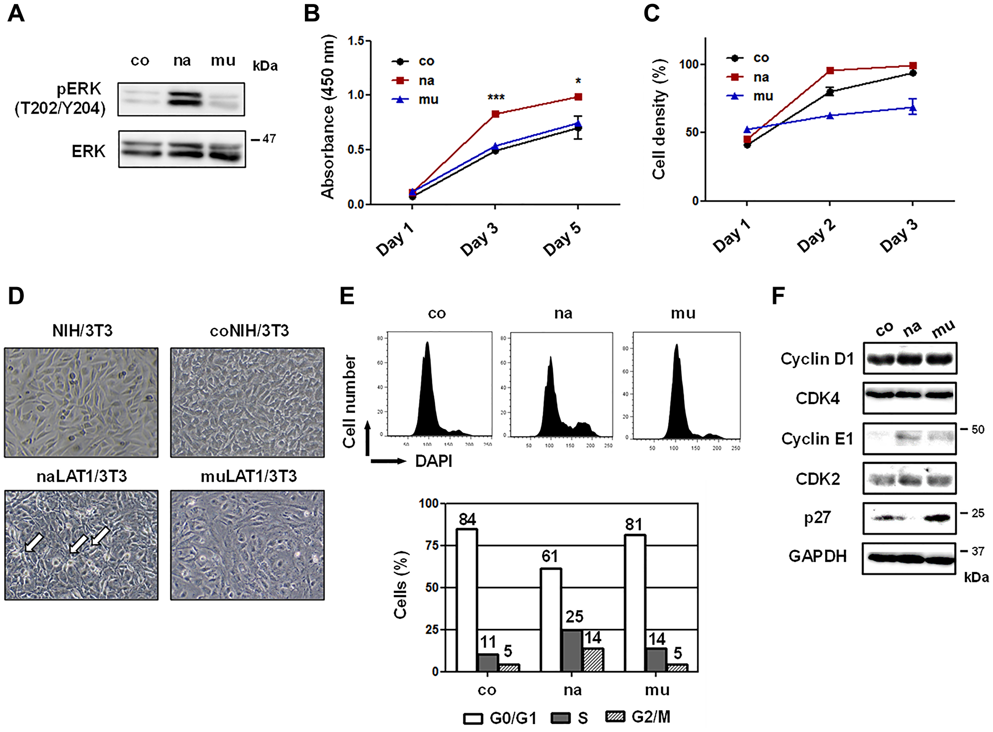 Cell growth-related phenotypes of NIH/3T3 cell lines overexpressing human LAT1 proteins.