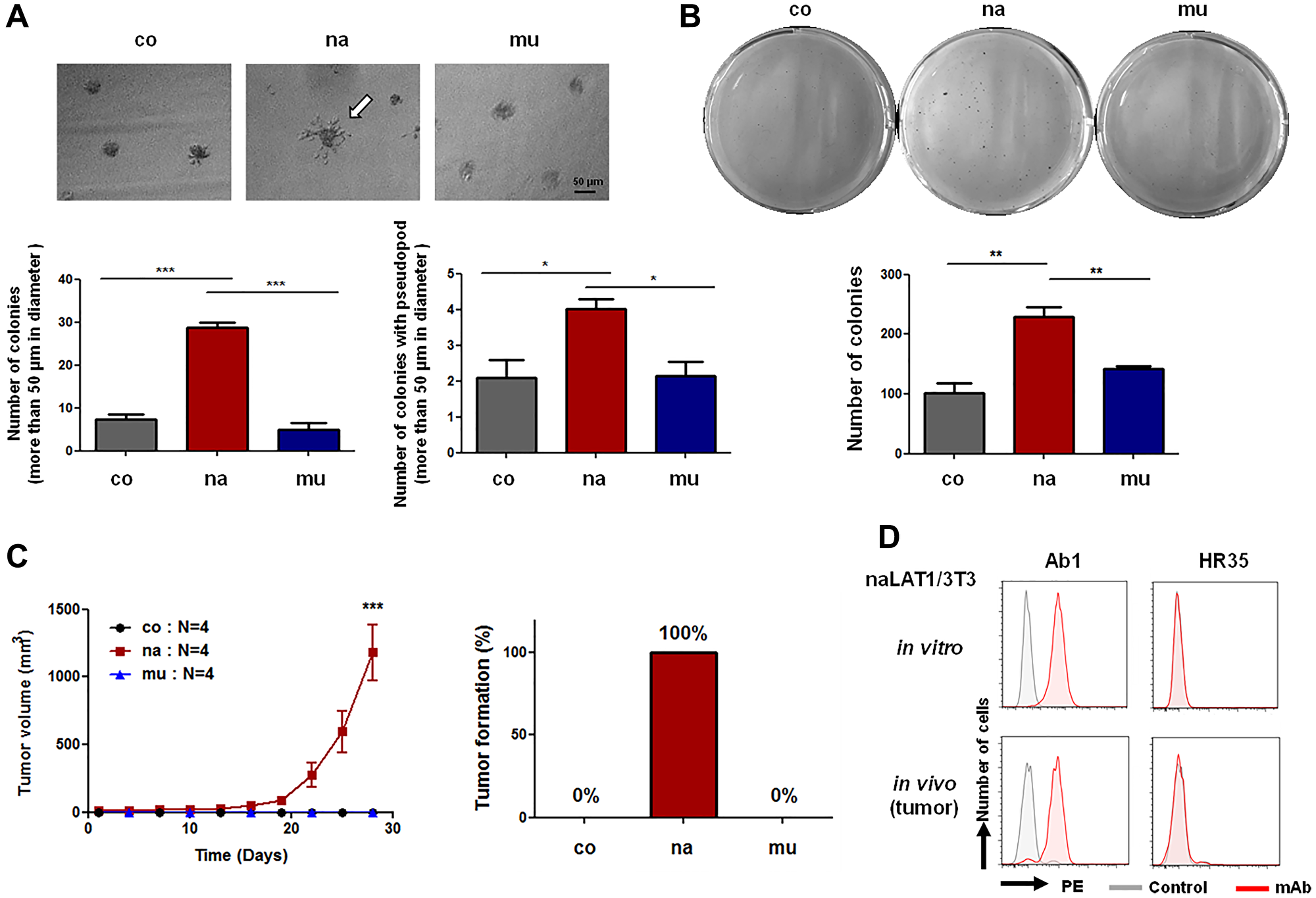 Cell malignancy-related phenotypes of NIH3T3 cell lines overexpressing human LAT1 proteins.
