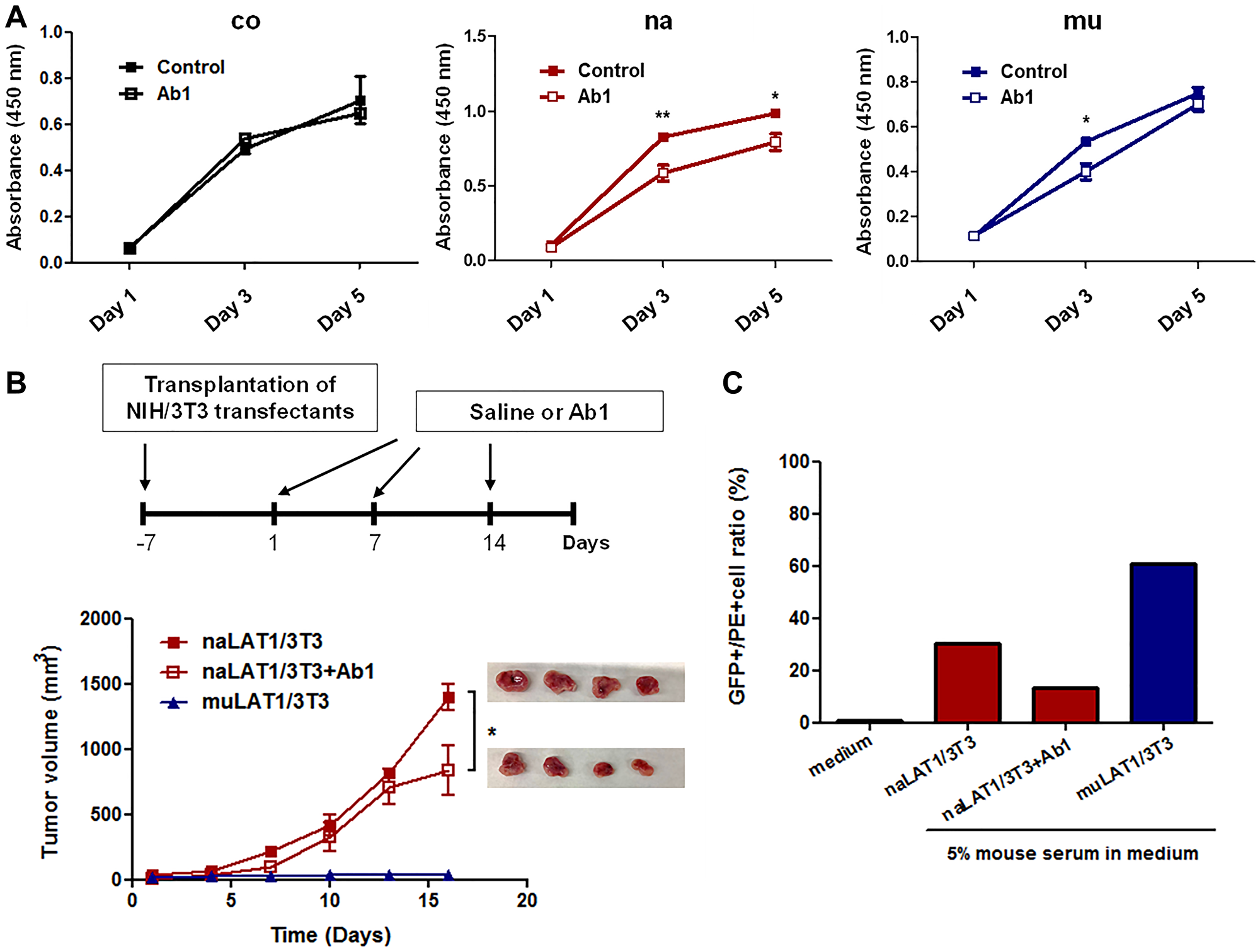 Effects of anti-LAT1 (Ab1) mAb on NIH/3T3 cell lines overexpressing LAT1, and mouse antibody production against NIH/3T3 cell lines expressing native or mutant human LAT1.