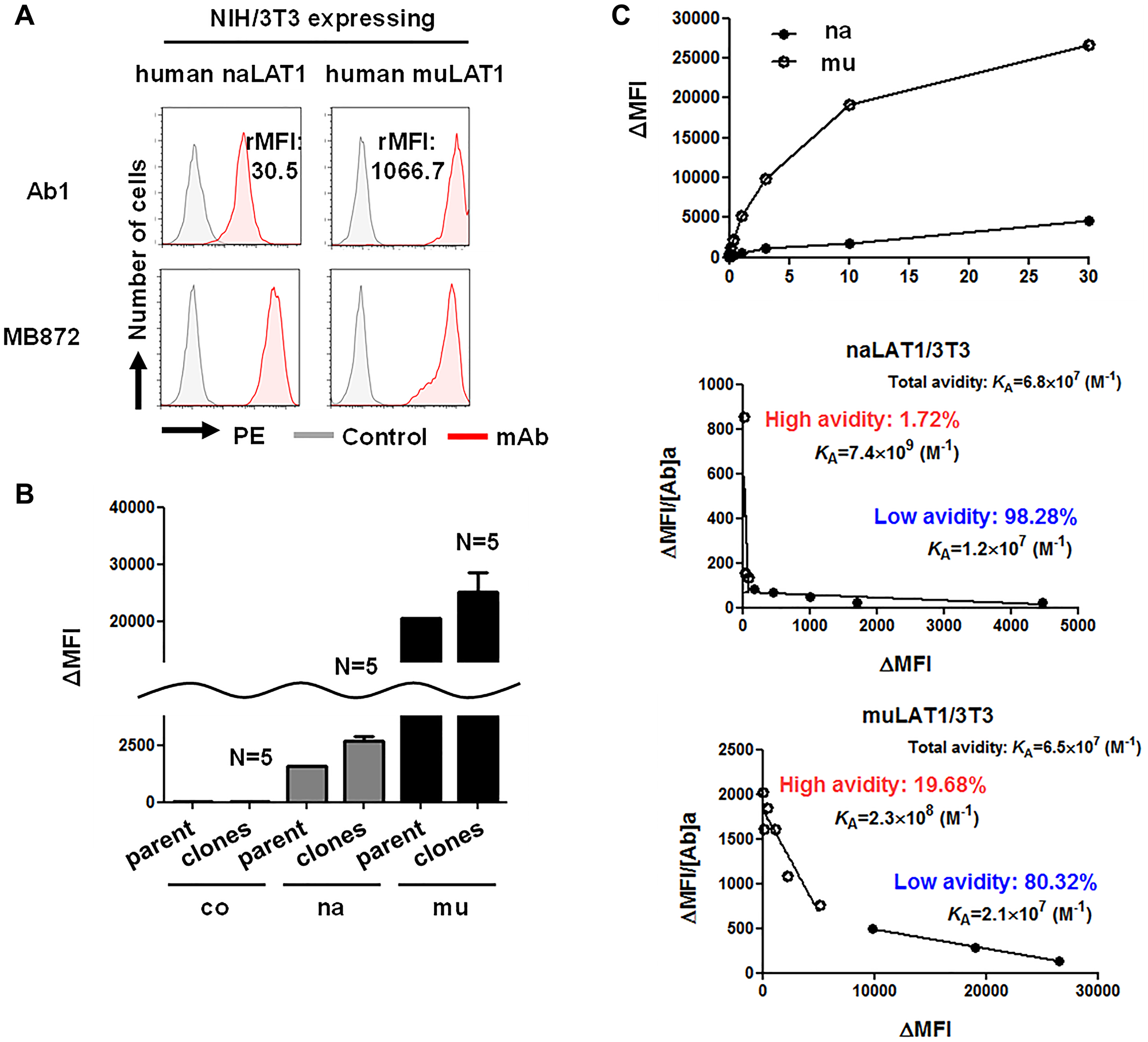 High-affinity binding of anti-LAT1 mAb against muLAT1/3T3 and CD98hc-independent cell-surface expression of LAT1 in human cells.