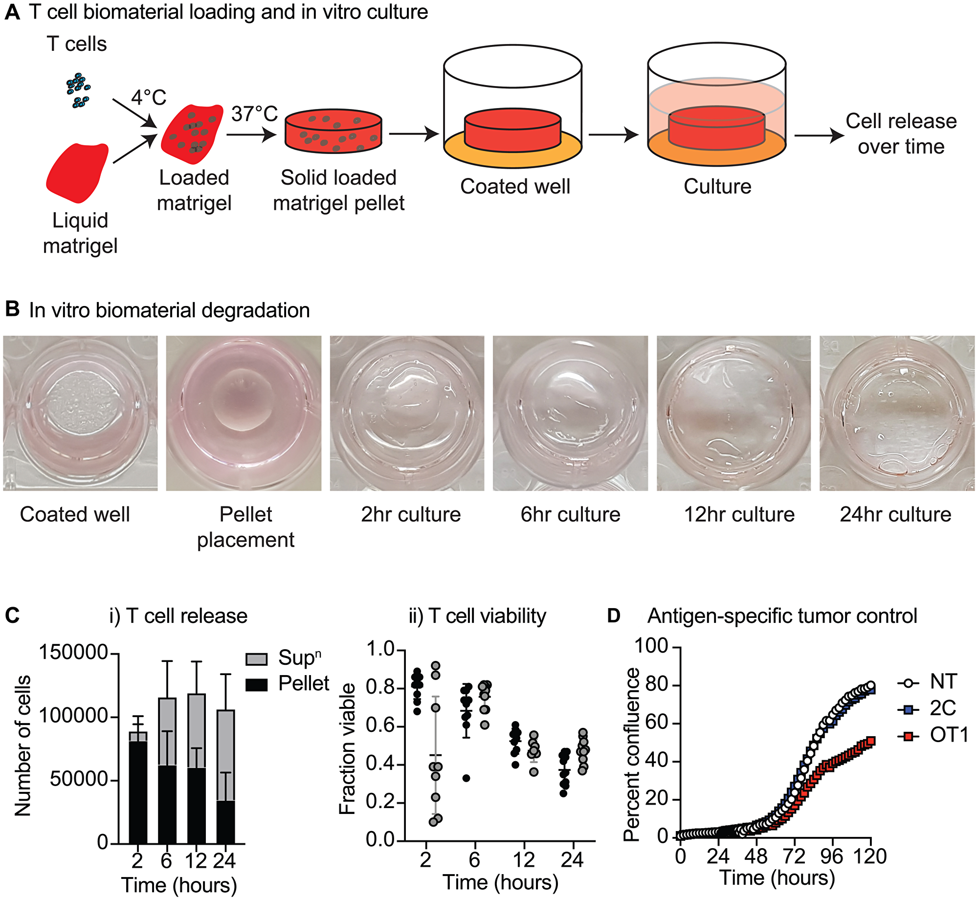 Biomaterial loading of T-cells.