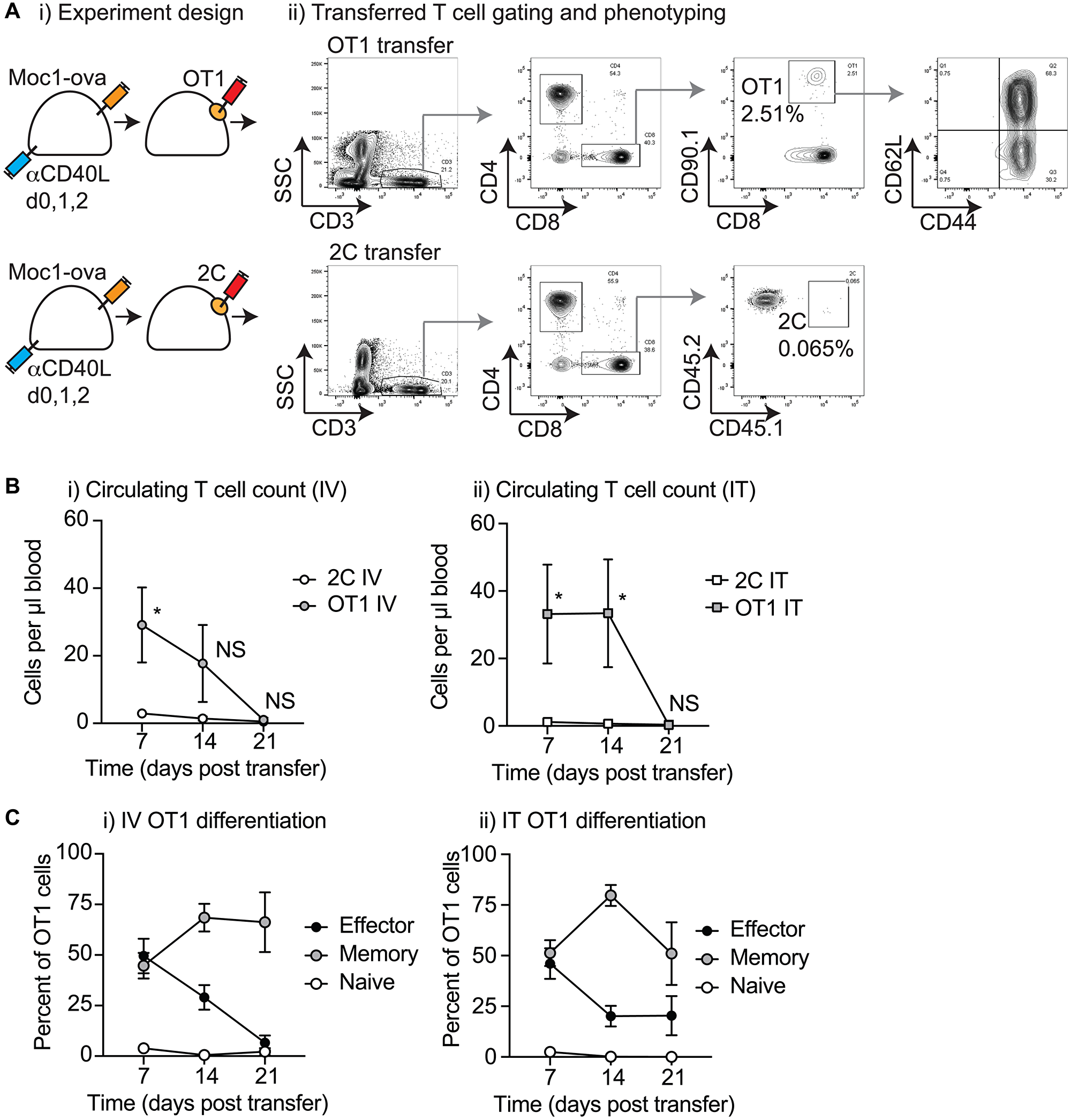 Characterization of circulating T-cells following biomaterial injection.