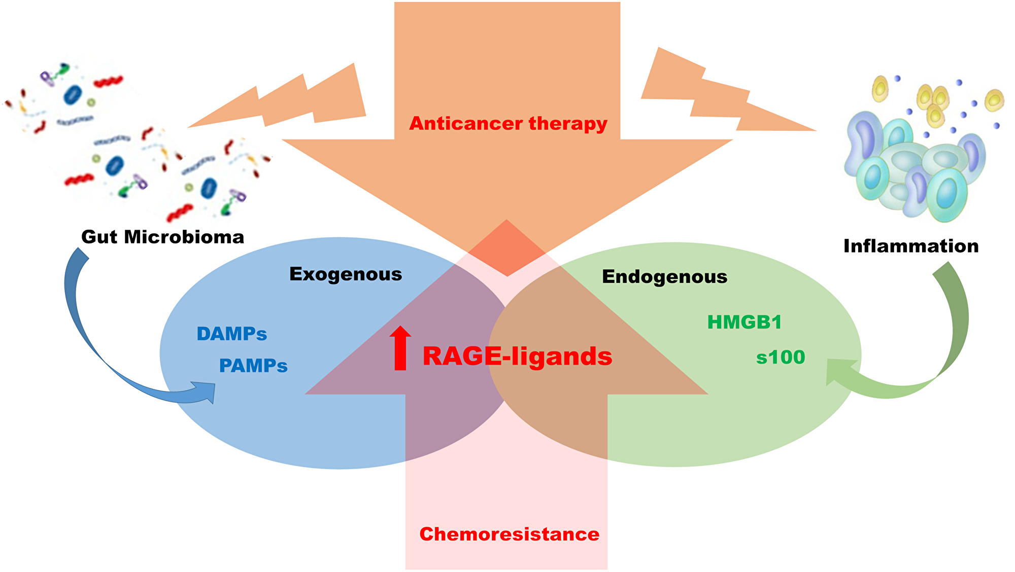 Mechanism of chemo resistance RAGE-ligands dependent.