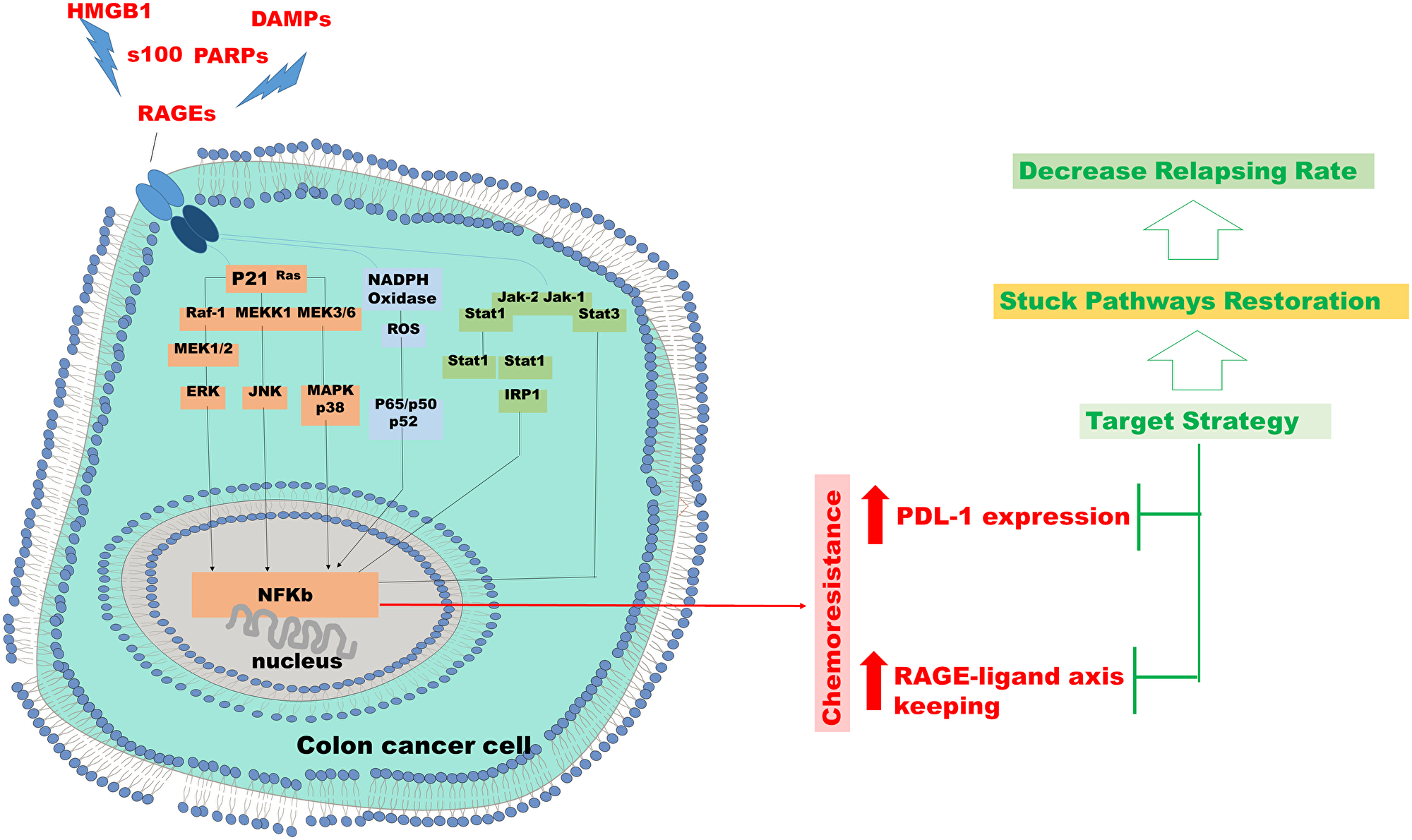 Chemo resistance in colon cancer cell.