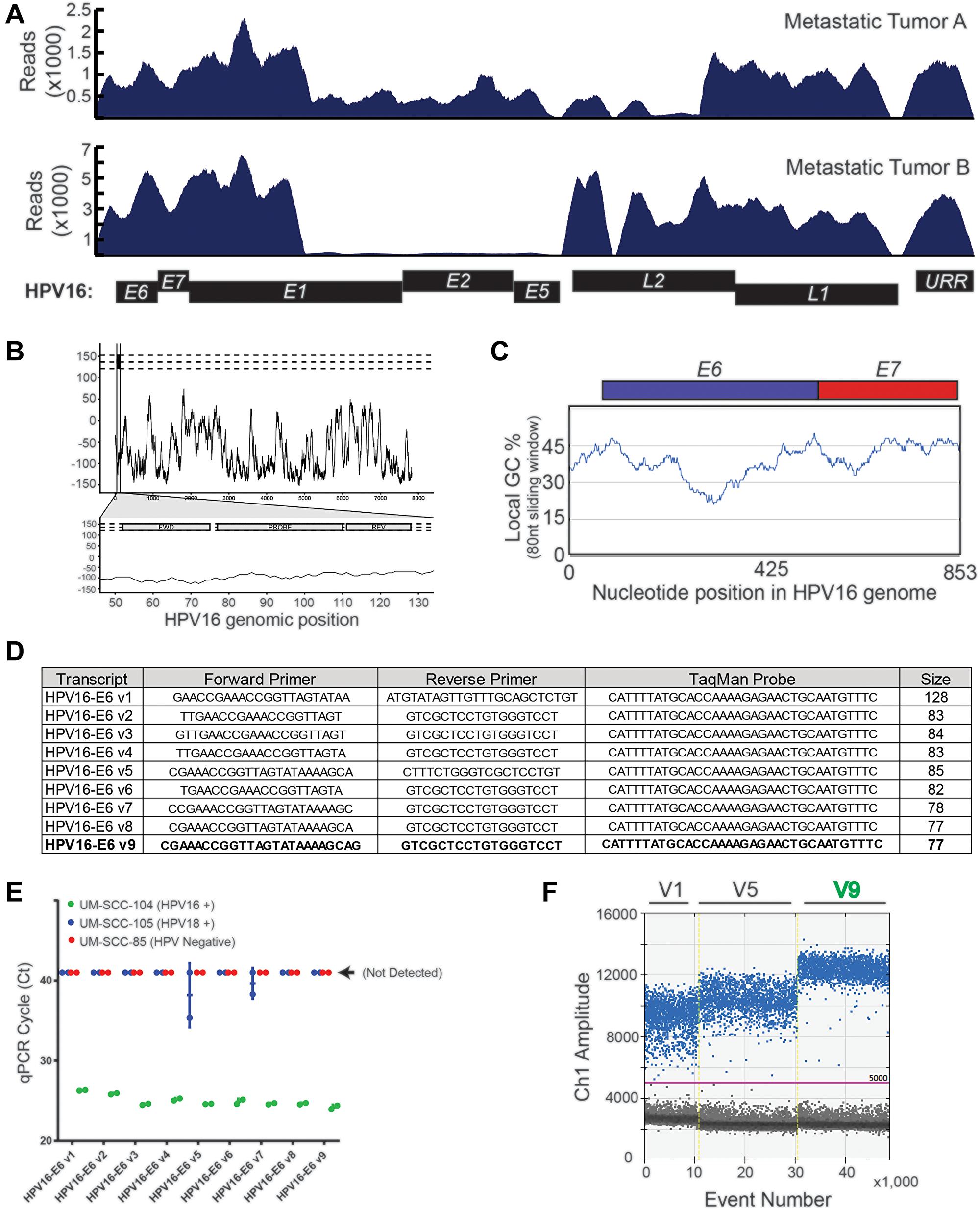 HPV16 plasma ctDNA assay development.