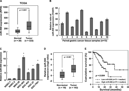 Overexpression of miR-500 correlates with gastric cancer progression.