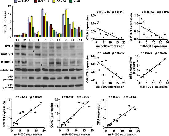 Clinical relevance of miR-500, NF-κB activation, and its targets in gastric cancer.