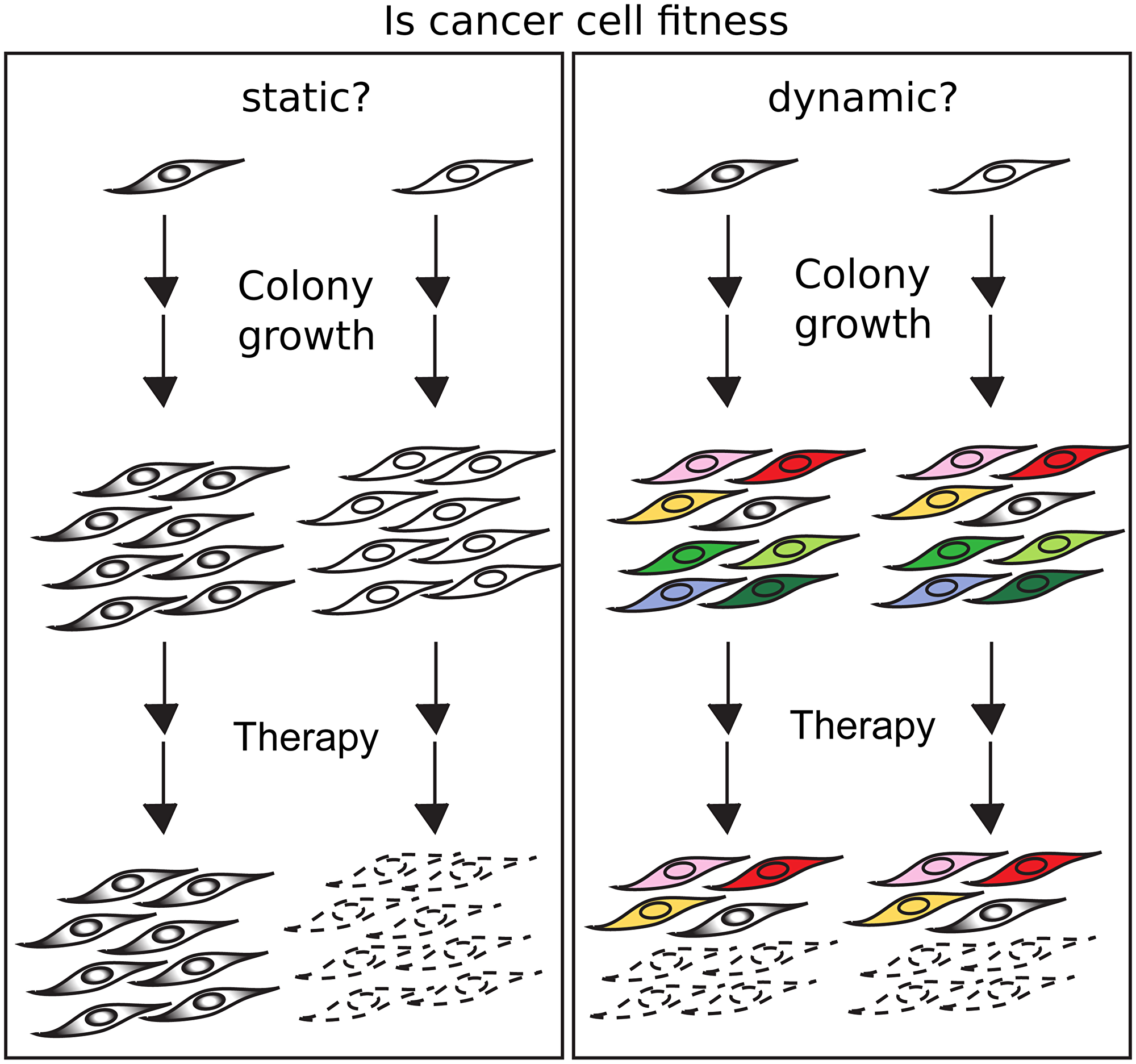 If fitness is conserved, cells with high and low fitness will generate colonies which will be resistant or sensitive to a therapeutic agent (left).