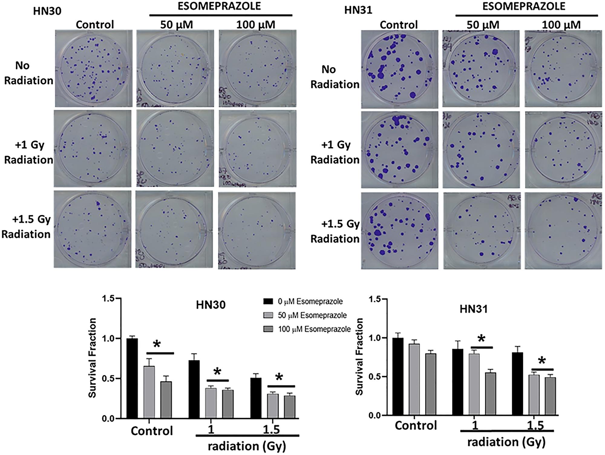 Esomeprazole enhances the effect of radiation to improve tumor control in vitro.