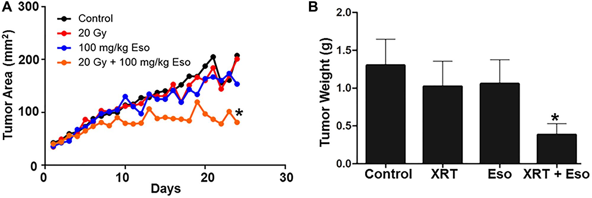 Esomeprazole enhances the effect of radiation to improve tumor control in vivo.