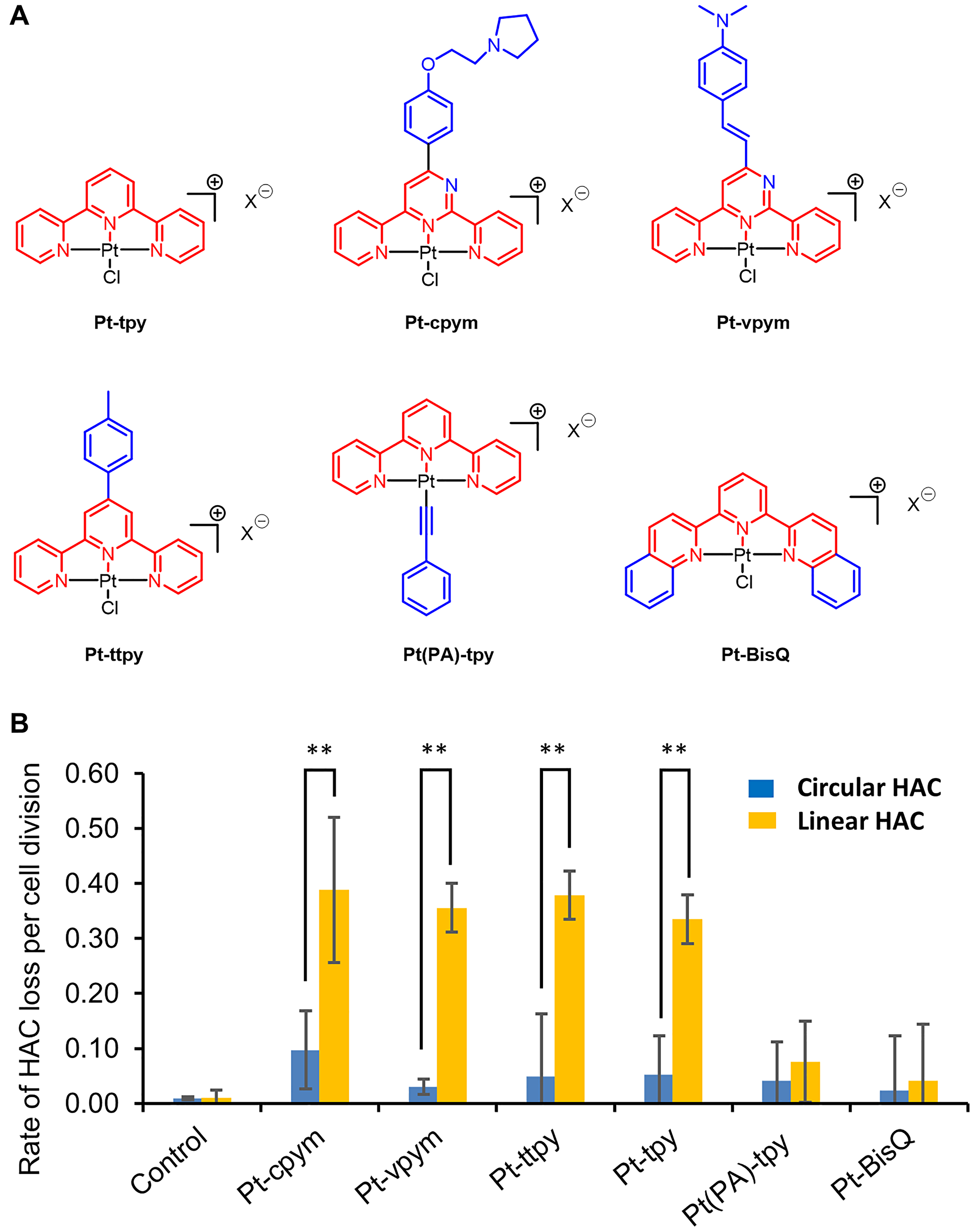 Effect of terpyridine platinum compounds on a linear versus a circular EGFP-HAC mis-segregation rate.