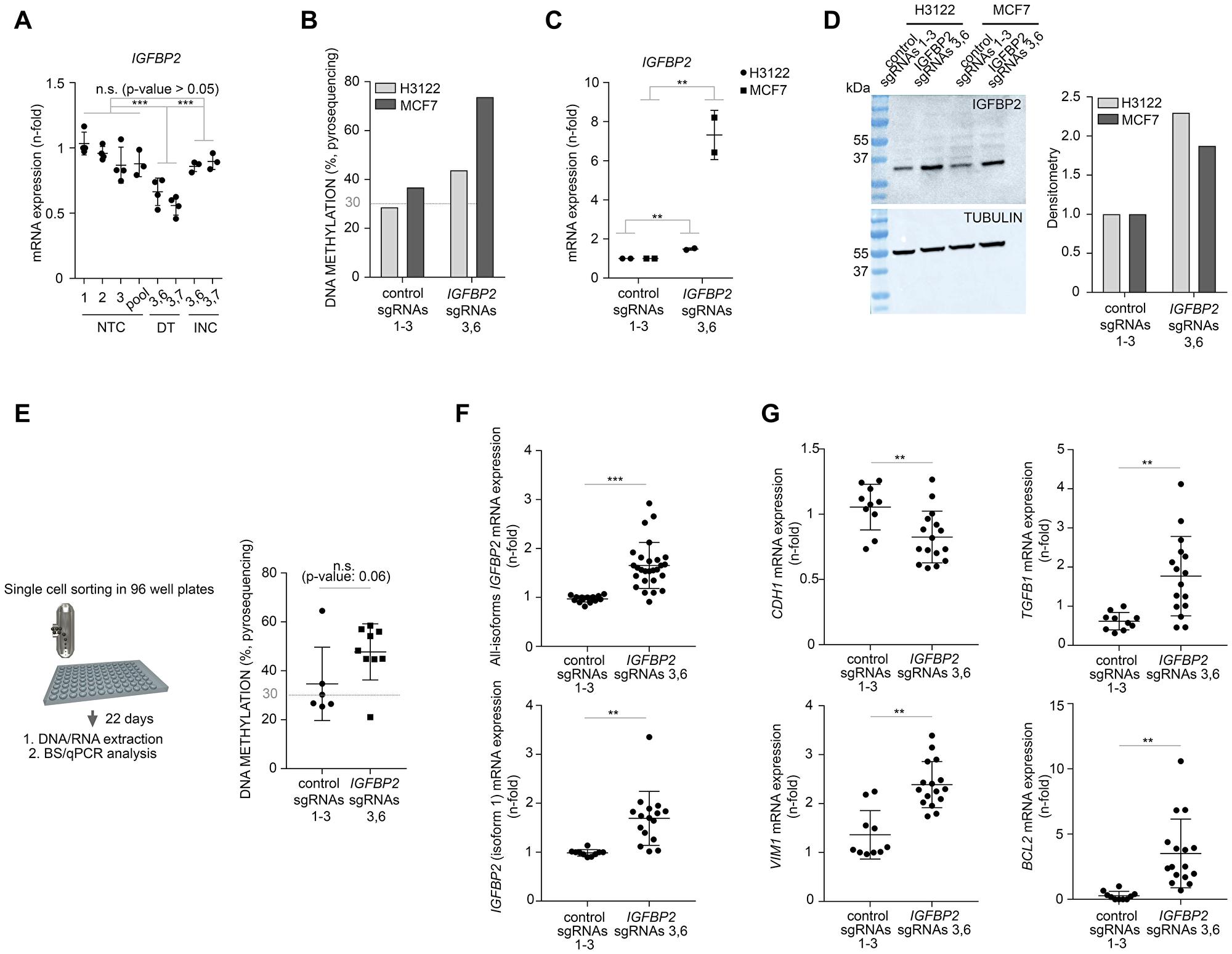 CRISPR/dCas targeted DNA methylation of IGFBP2 promoter affects gene transcription and EMT transcriptomics in cancer cells.