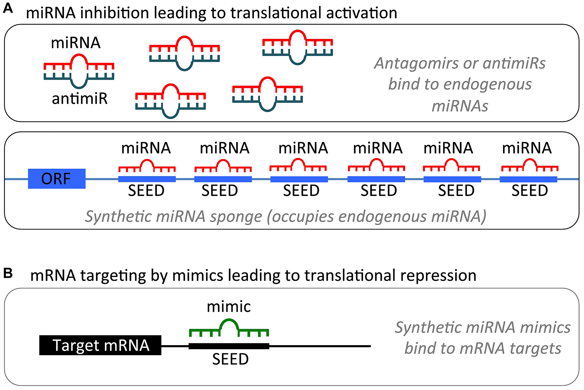miRNA modulation strategies for therapeutic intervention.