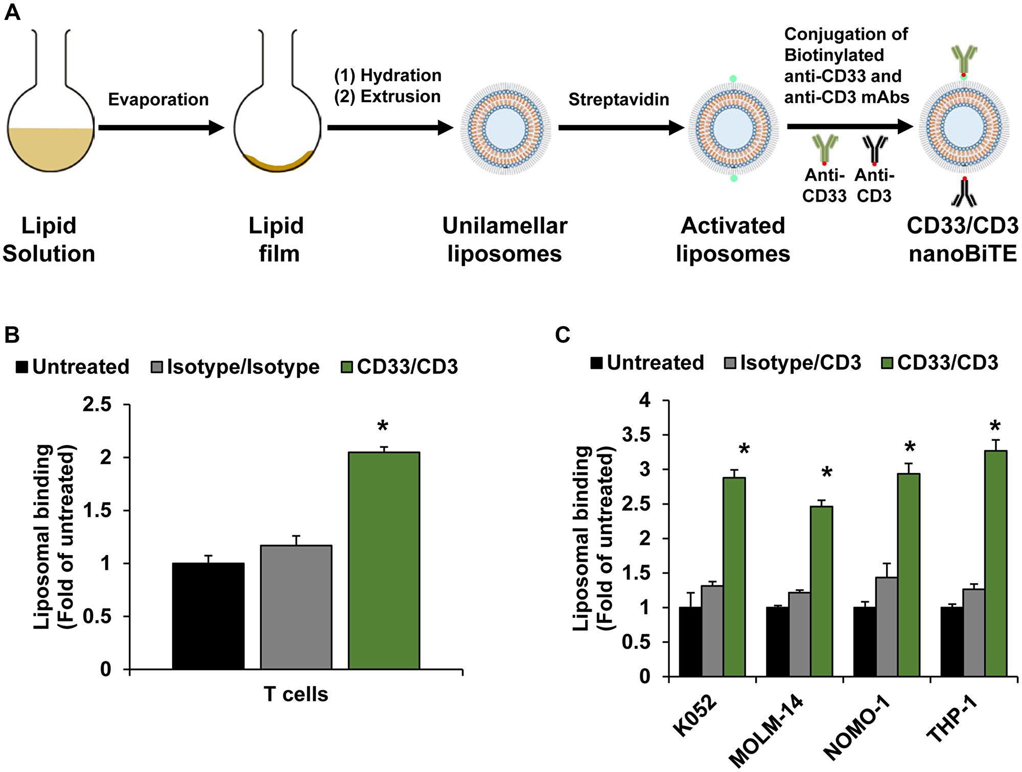 Development of nanoTCEs for AML.